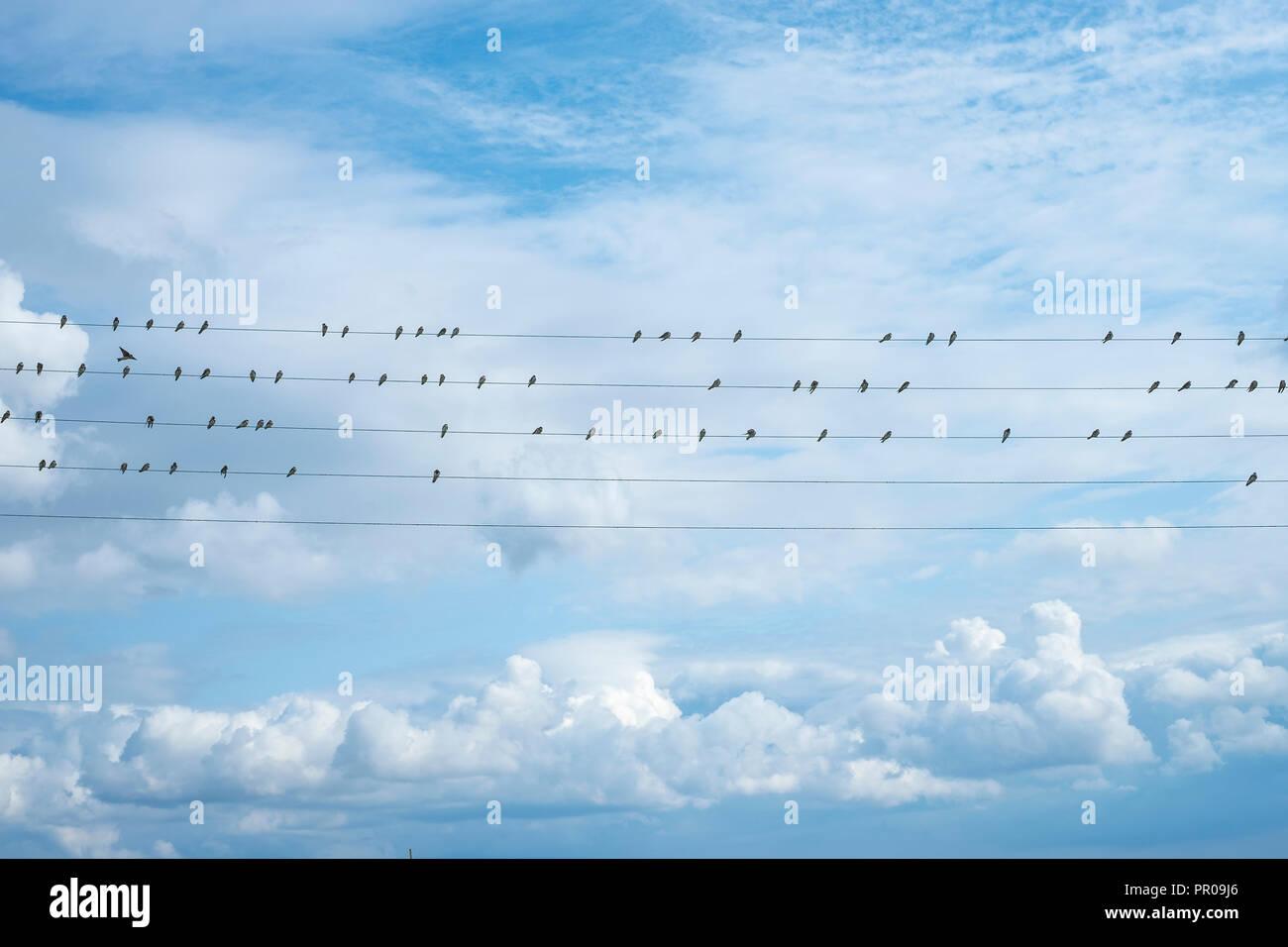 Zugvögel aufgereiht auf Leitungen in den Hafen von Nyord (nyord Havn) auf der Insel Nyord, Dänemark, Skandinavien, Europa. Stockbild