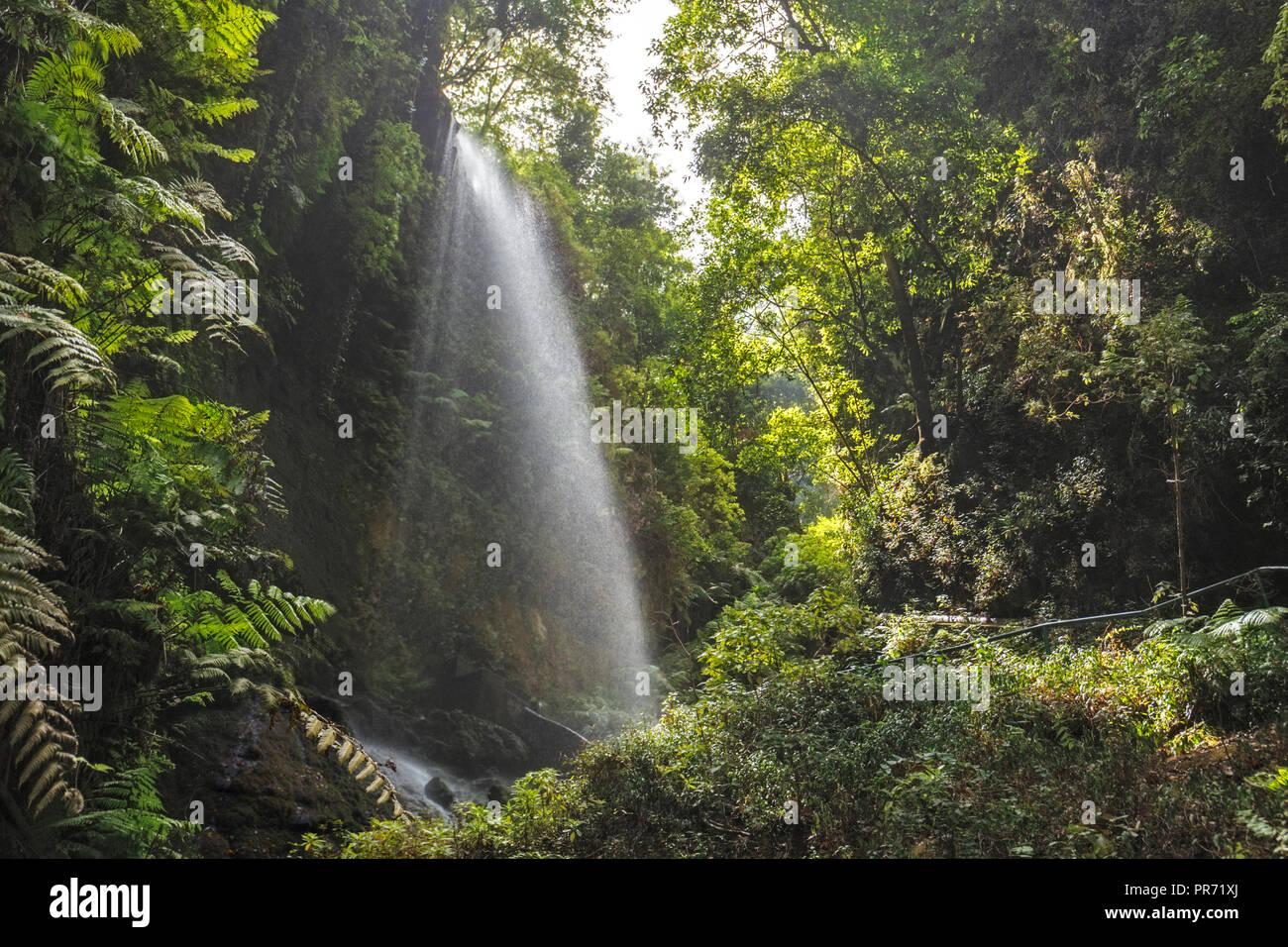 Los Tilos Wasserfall auf La Palma, Kanarische Inseln Stockbild