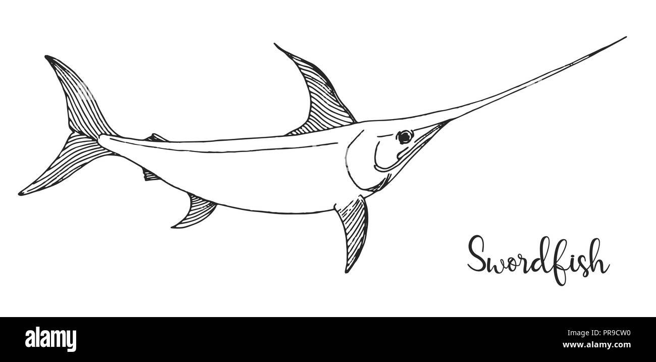 Schwertfische datieren Kanadische Dating-Website Ahorn