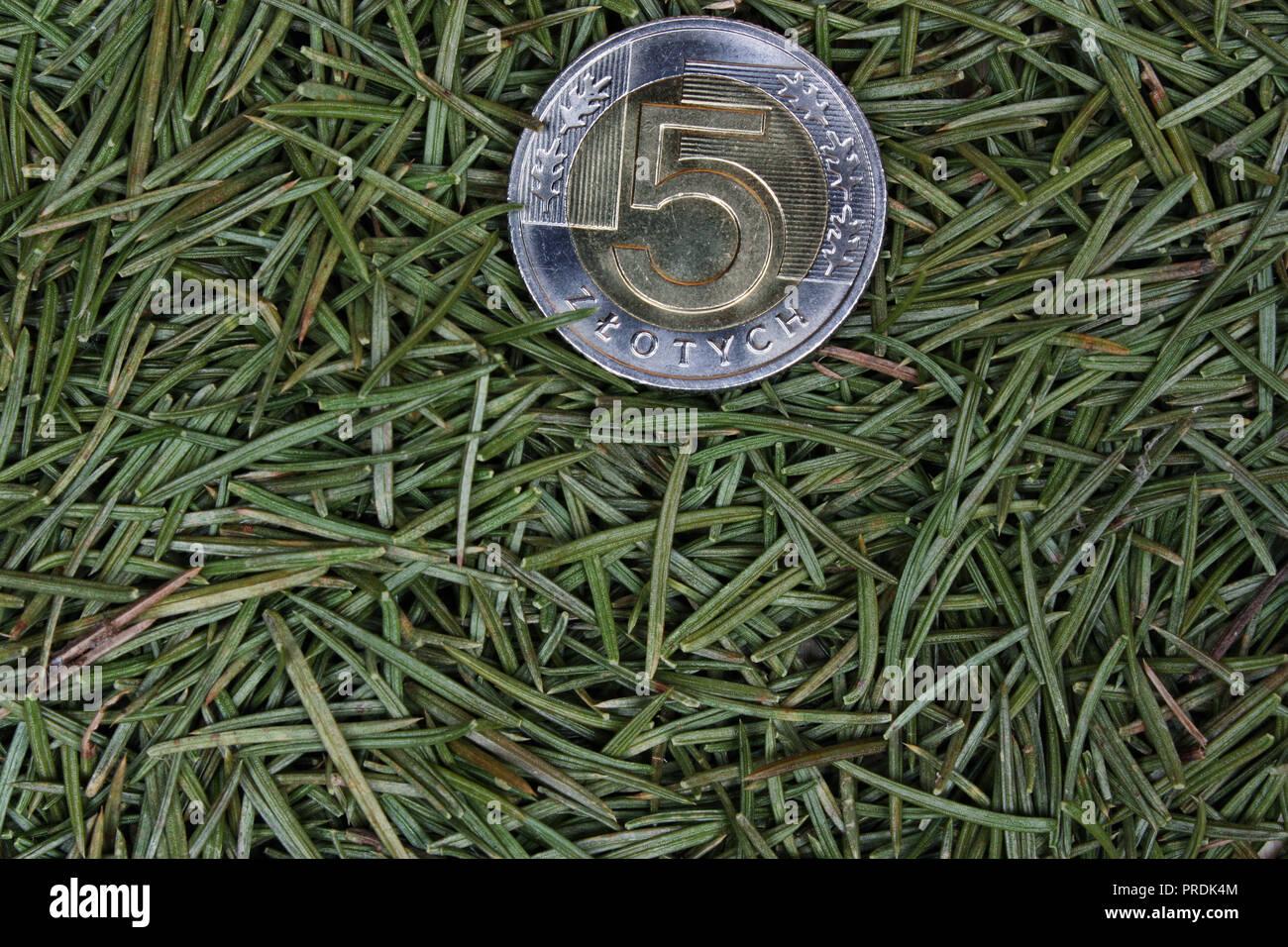 Polnische Geld Münze Vor Dem Hintergrund Der Tannennadeln Stockfoto