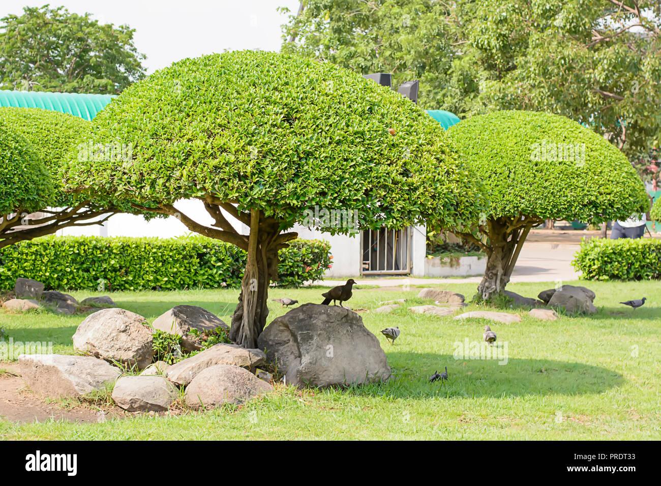 Die Vögel & Baum schöne Verkleidung im Garten Stockfoto, Bild ...