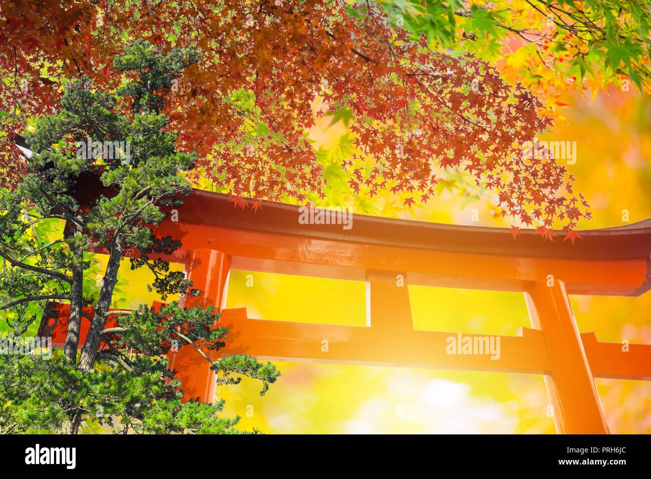 Ahorn Mit Holz Rotes Tor Natur Von Japan Im Herbst Reisen Kunst Dekoration Fur Hintergrund Oder Postkarte Stockfotografie Alamy
