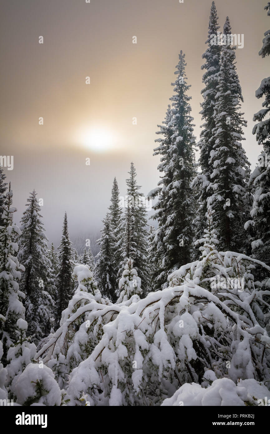 Verschneite Bäume in der Nähe von Moraine Lake im Banff National Park, Alberta, Kanada. Stockbild