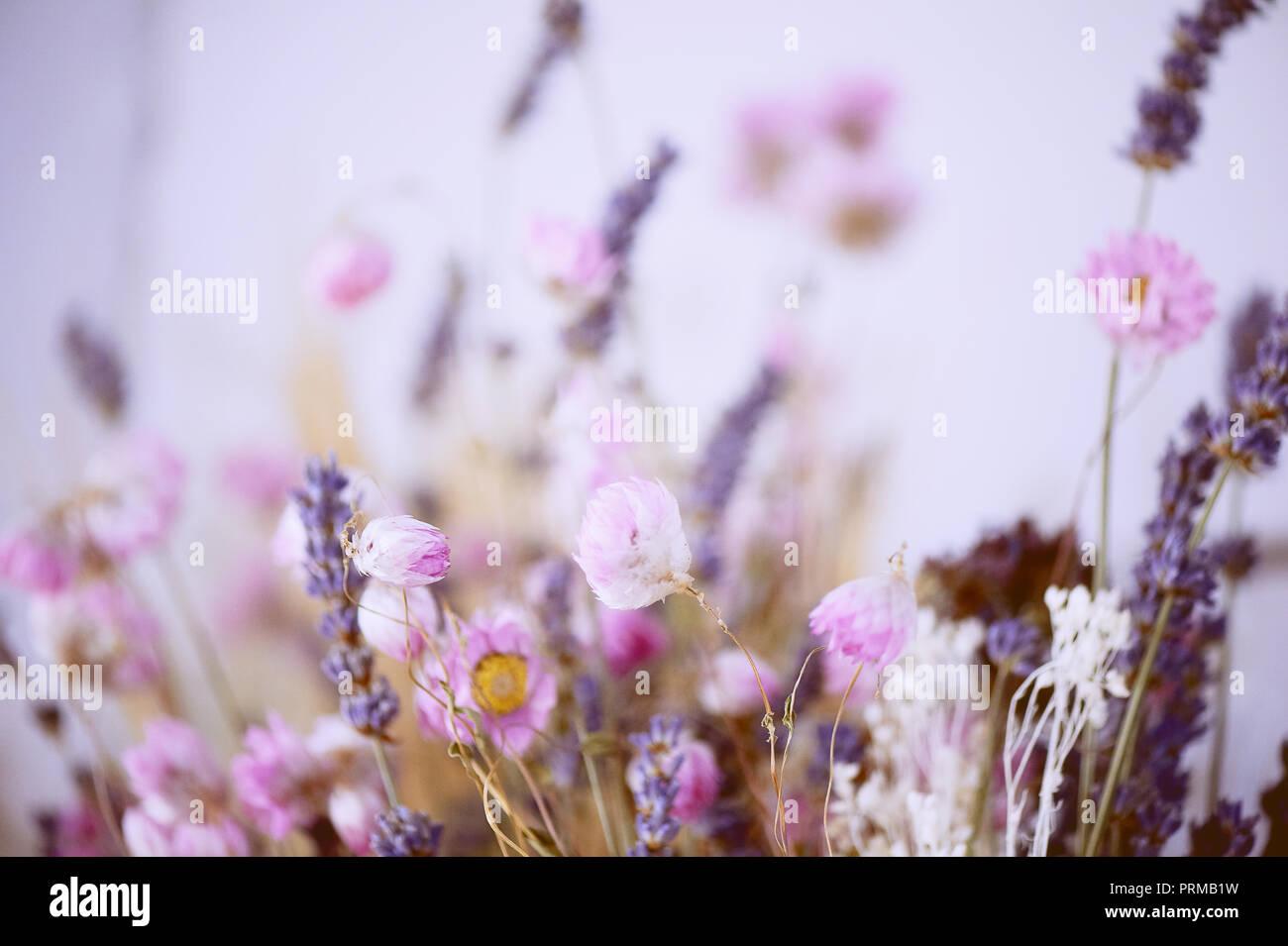 Pastellfarben Textur. Kleine rosa und lila Blüten. Abstraktion. Die getrockneten Blumen Stockbild