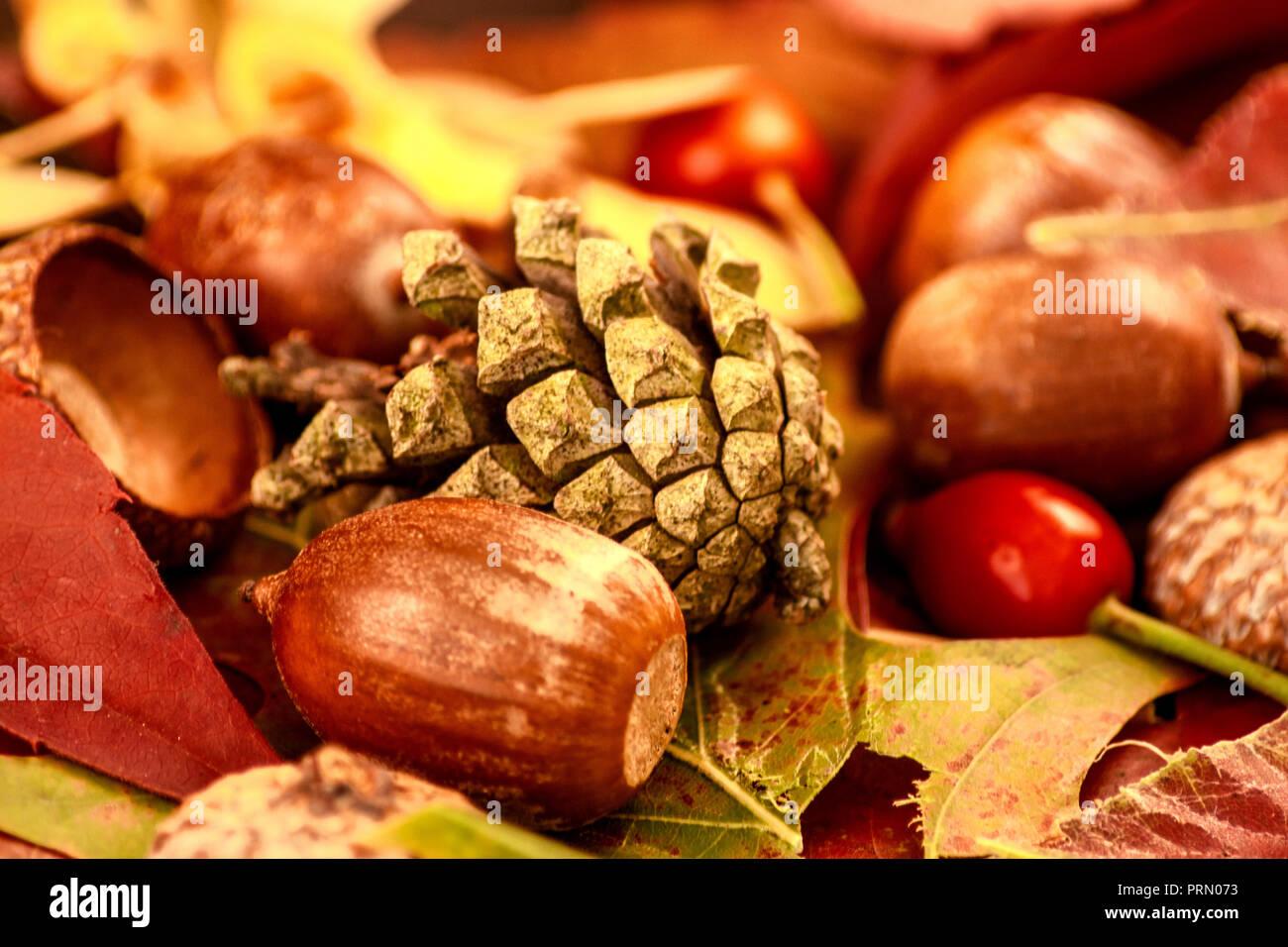 Konzept im Herbst: Arbores autumnales effectu Stockbild