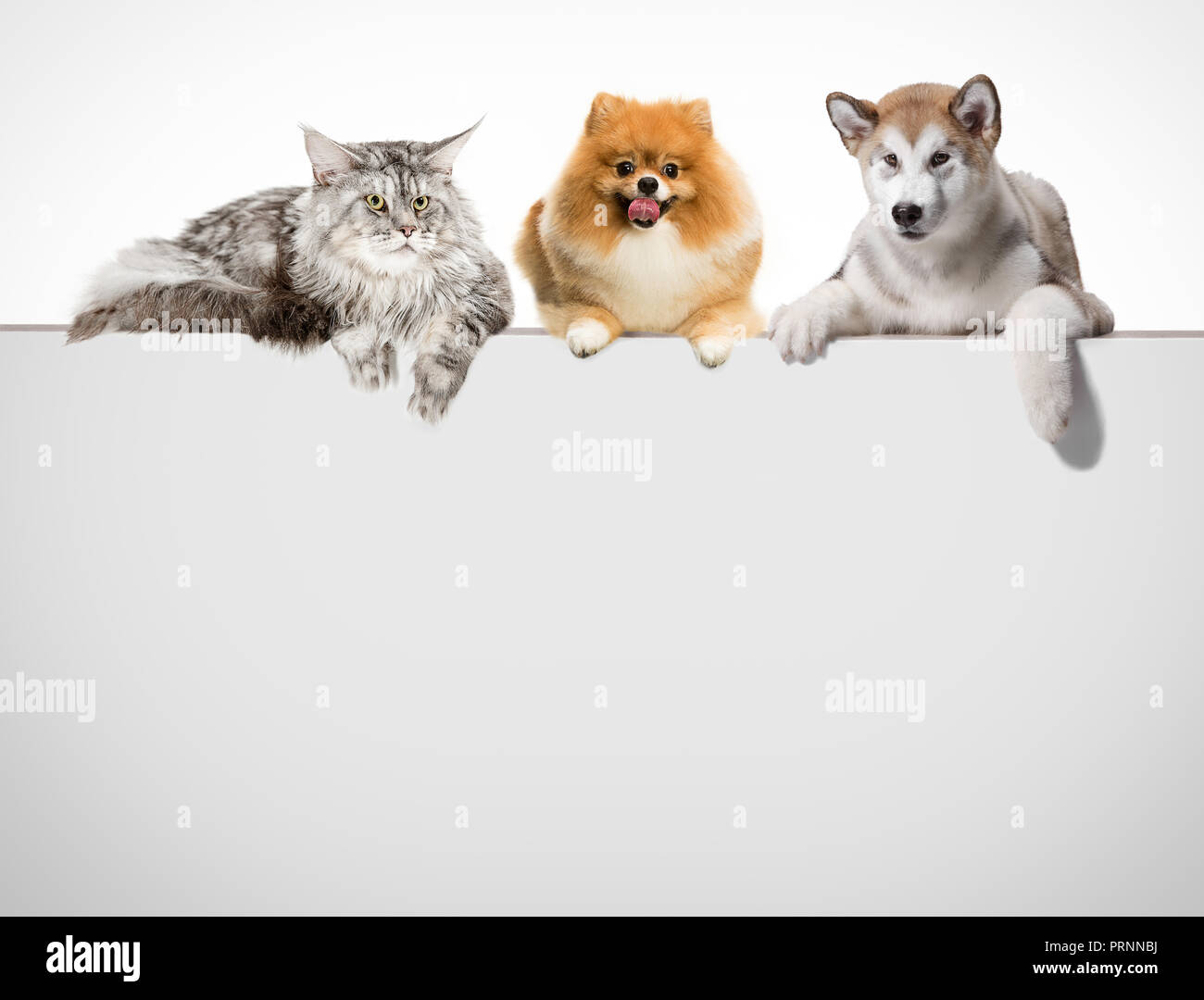 Reihe Von Katzen Und Hunden Die Pfoten Auf Eine Weiße Fahne