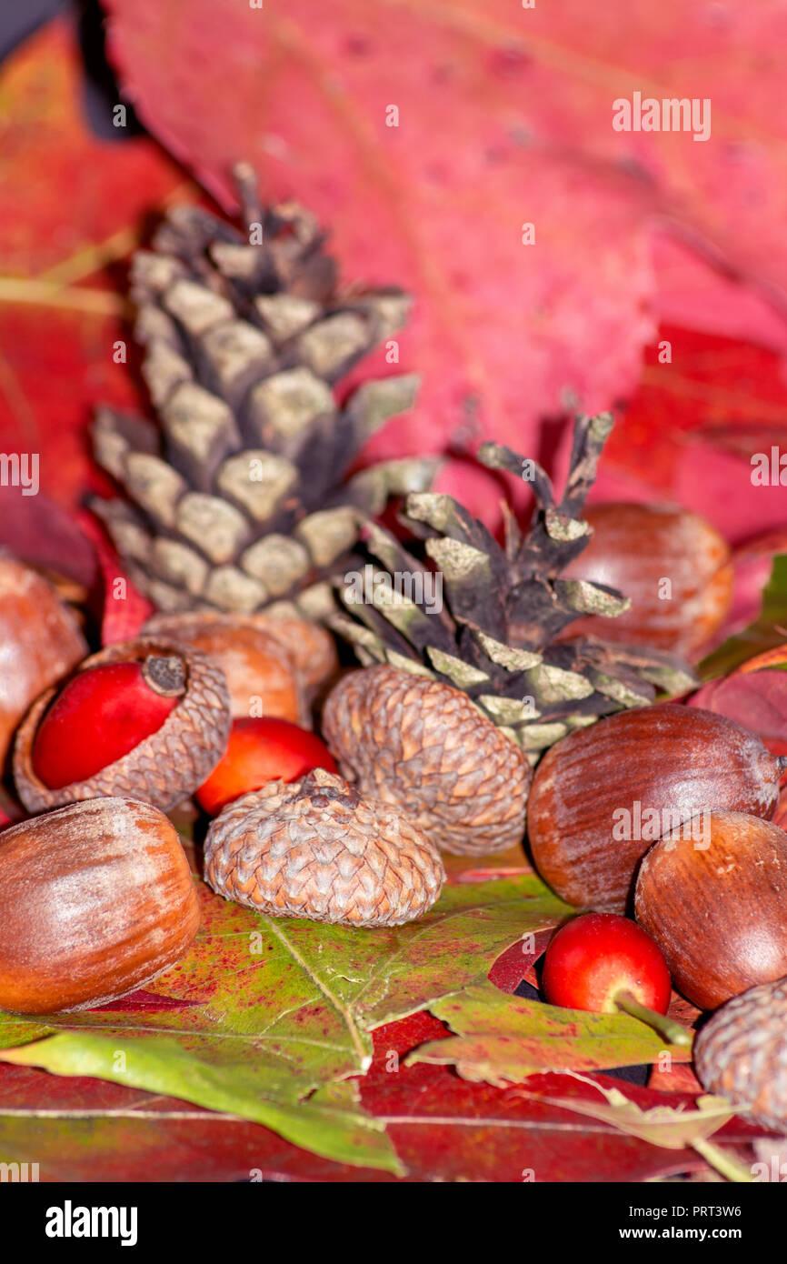 Konzept im Herbst: Arbores autumnales Modus nucibus pineis oportebit, rosa coxis et Haselnüsse Stockbild