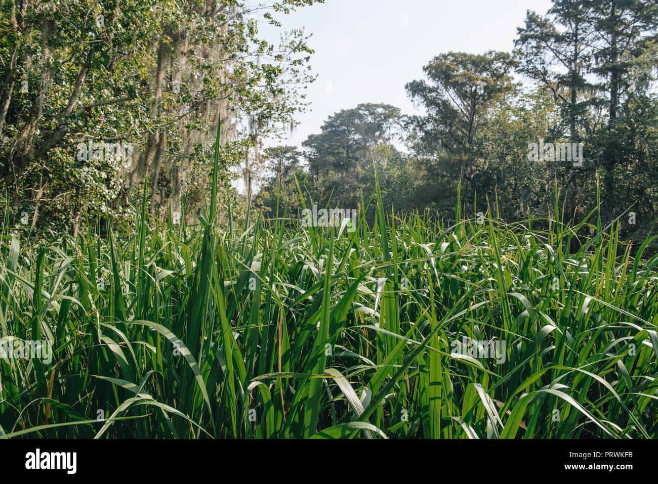 Swamp Tour in New Orleans Stockbild