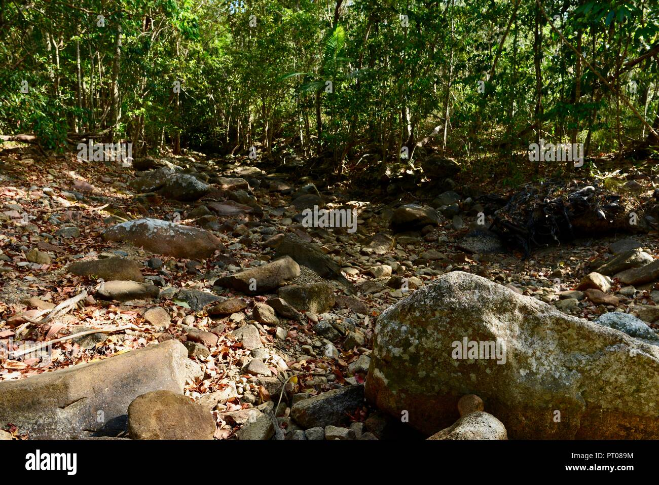 Ein Dry Creek Bed, Dämpfer Creek, Dalrymple Lücke, QLD, Australien Stockbild