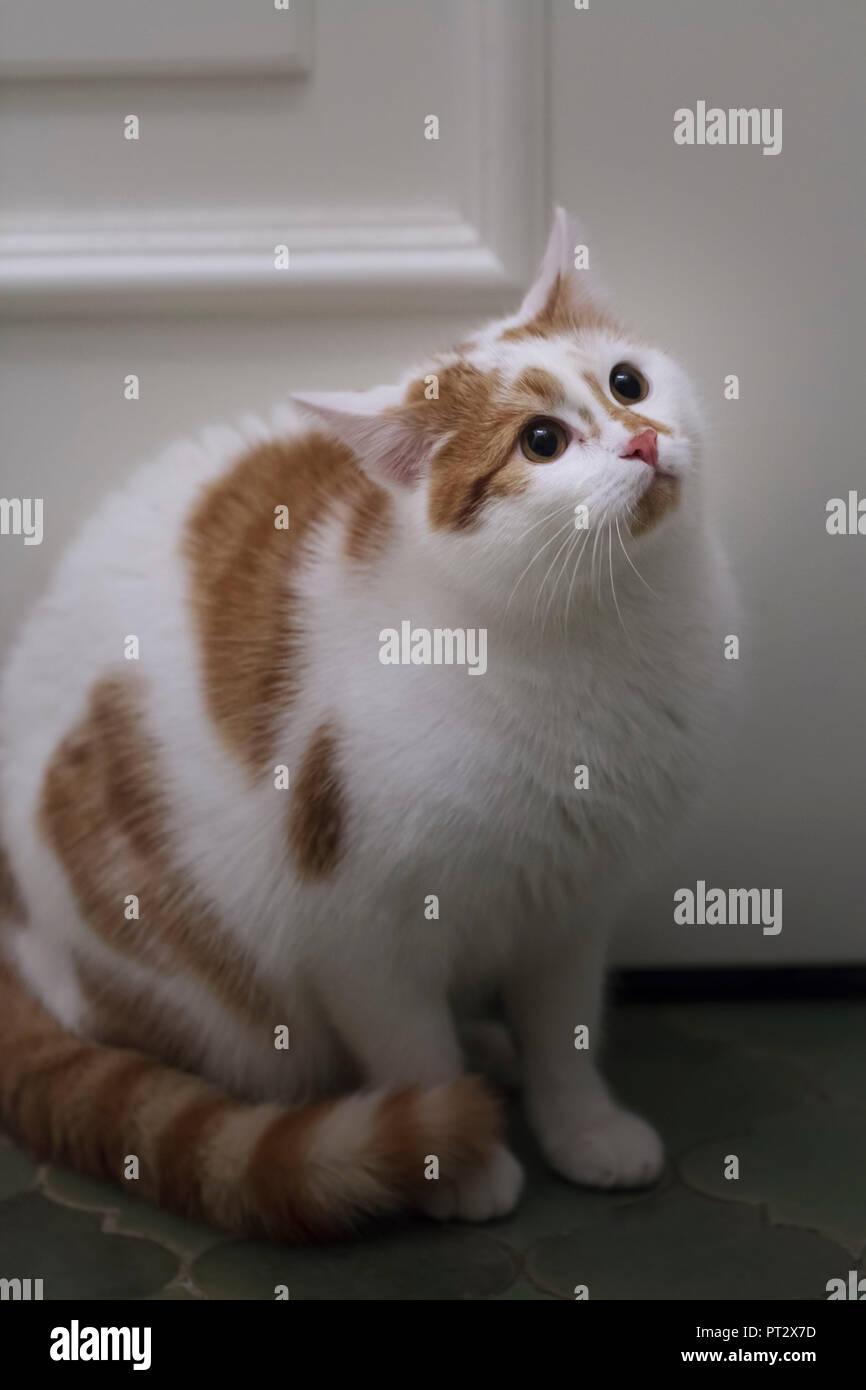 Eine Katze sitzt an der Tür erschrocken und oben zu schauen. Stockfoto