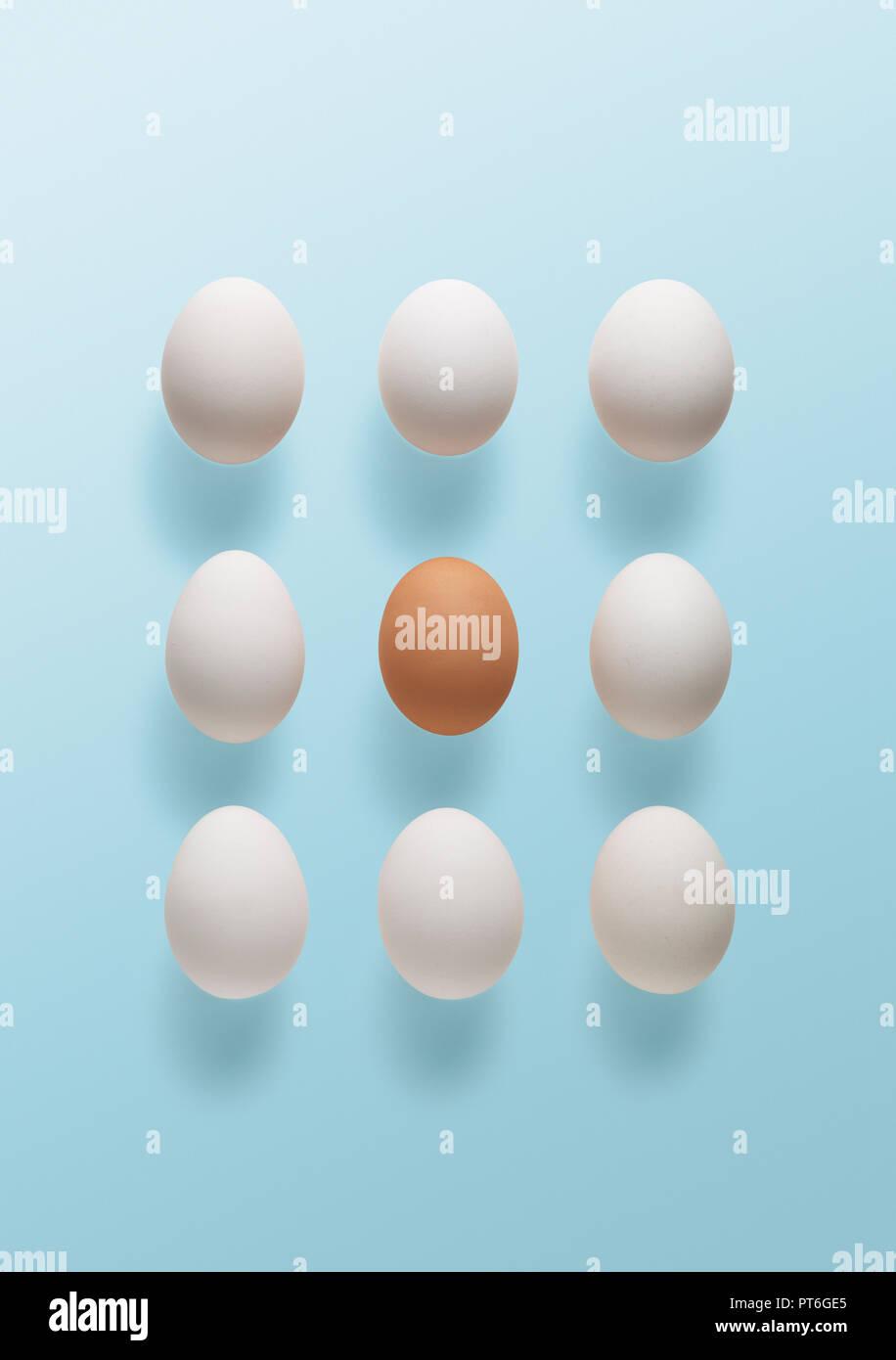 Konzept ein braunes Ei von Weiß umgeben Stockbild