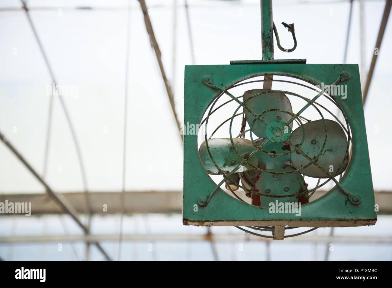Alten Vintage Retro rustikalen Grün innen Decke mechanische Metal Fan Gebläse für Belüftung, Temperatur kühl Regelung im Gewächshaus, Plantat Stockbild