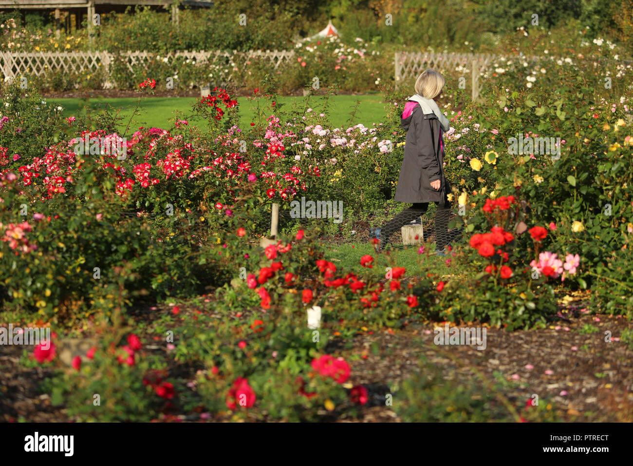 Herbst Im Sir Thomas Und Lady Dixon Park In South Belfast 10