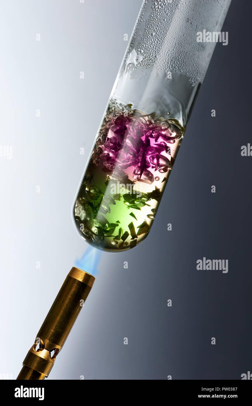 Konzept der Energieforschung, Algen, Alternative, Erneuerbare, Energie Stockbild