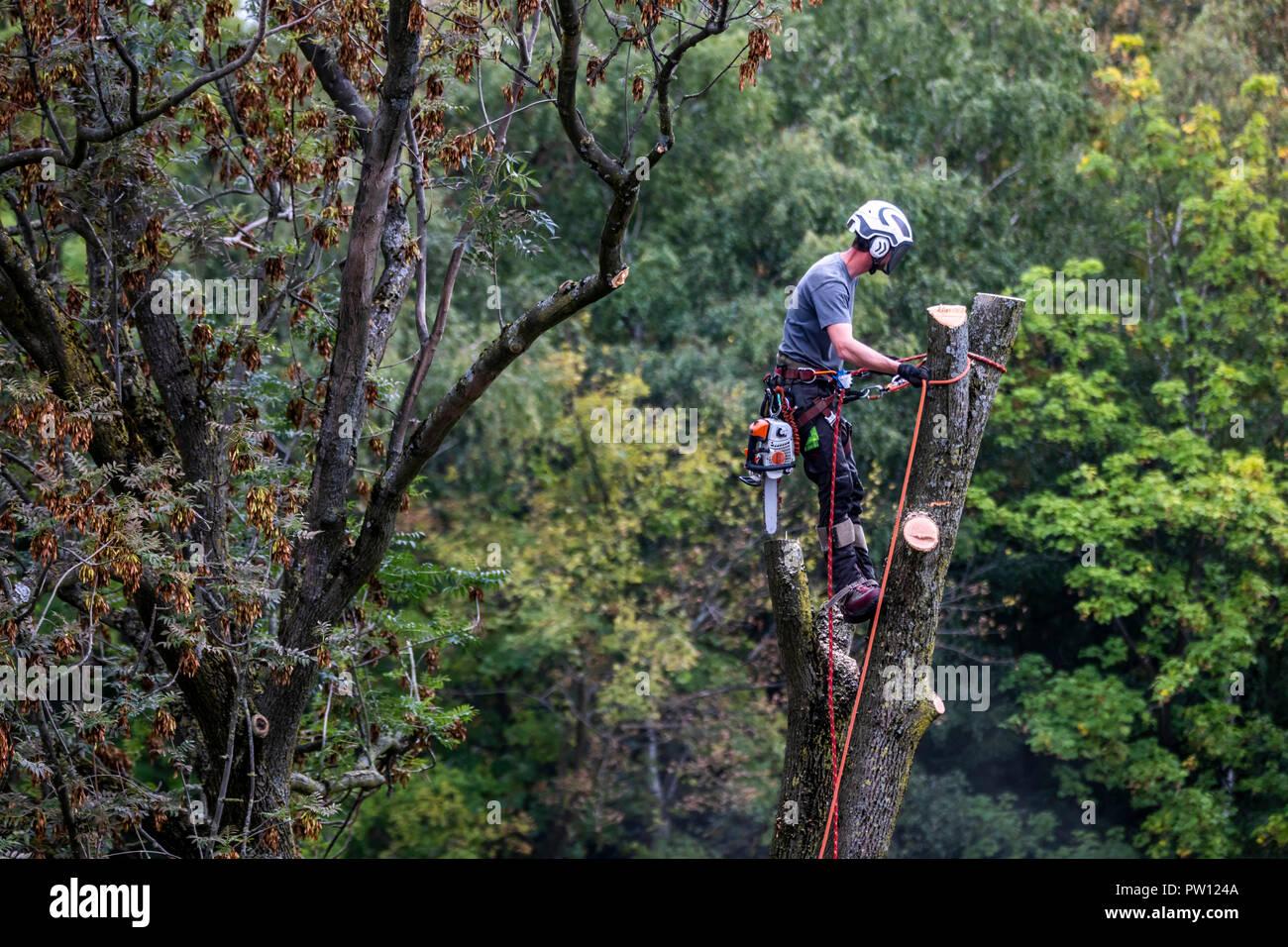 Kletterausrüstung Baum Fällen : Tree climber industriekletterer fällt ein laubbaum klettert mit