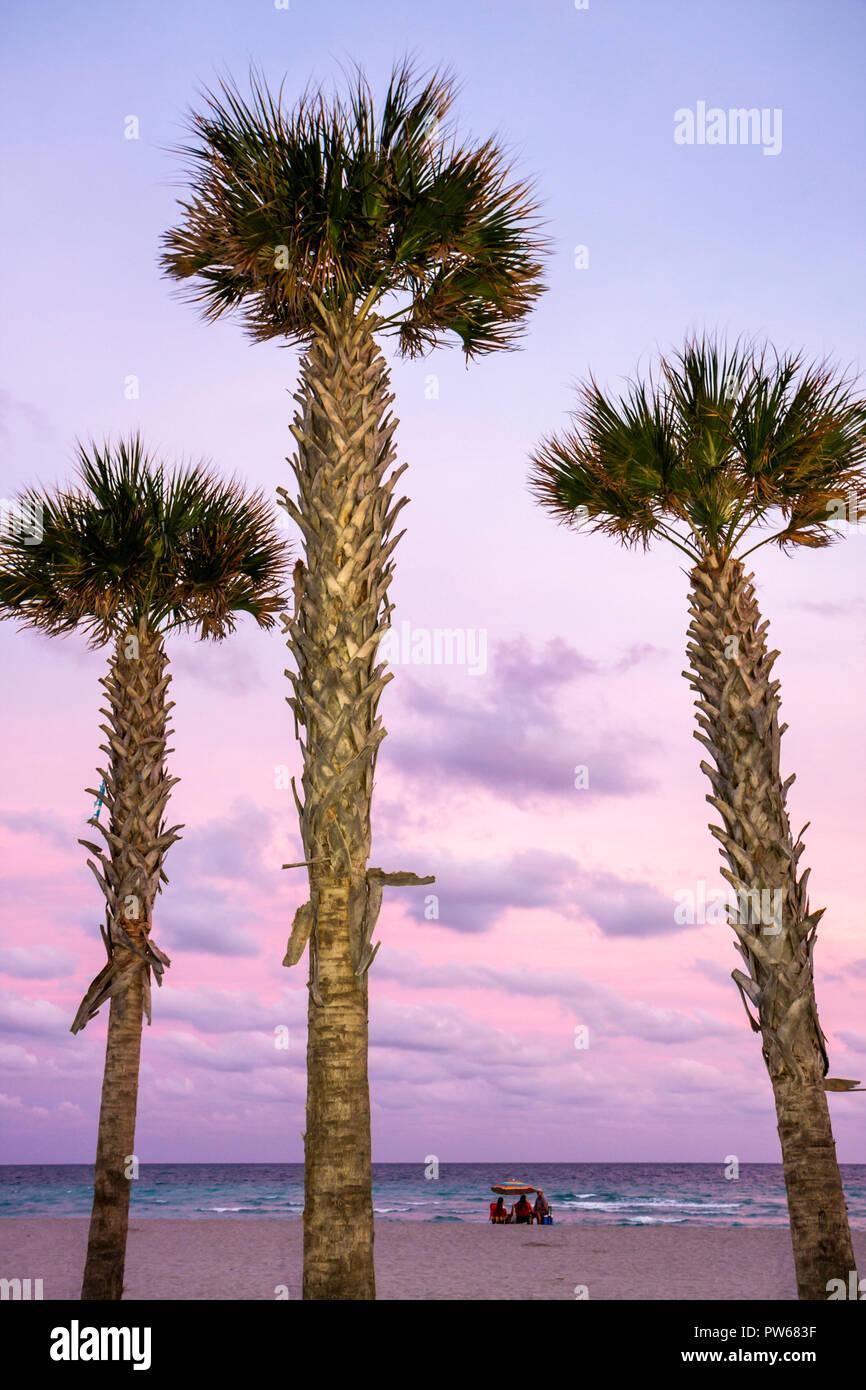 Hollywood Florida Hollywood Beach Boardwalk Atlantik stummgeschaltet drei Palm Tree Strand Meer Dämmerung Farbe rosa Sand Wedel Stamm g Stockbild