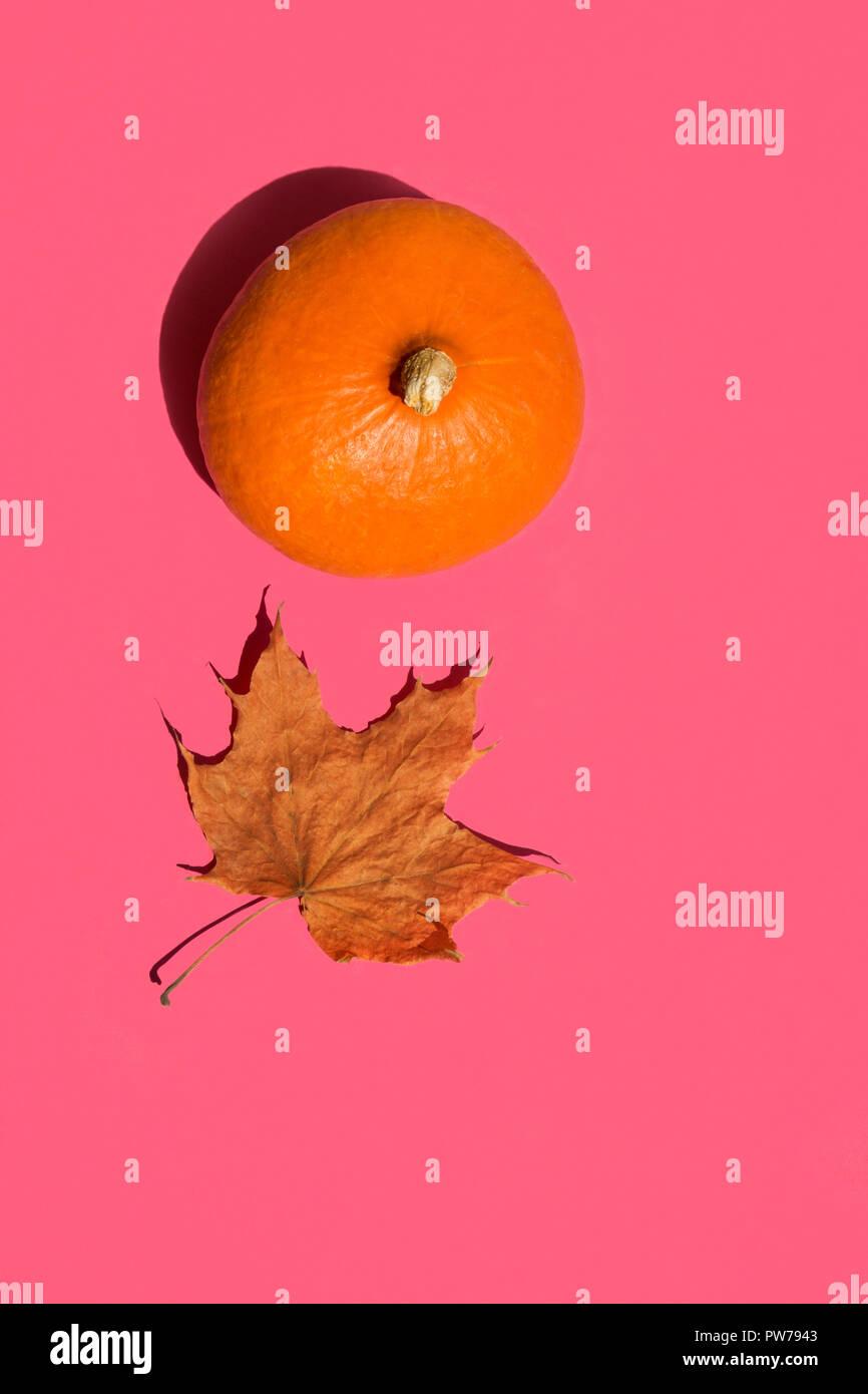 Helles orange Hokkaido Kürbis trocknen maple leaf auf solide fuchsia rosa Hintergrund. Sonnenlicht starke Schatten. Funky Pop Art Stil. Thanksgiving Herbst harv Stockfoto
