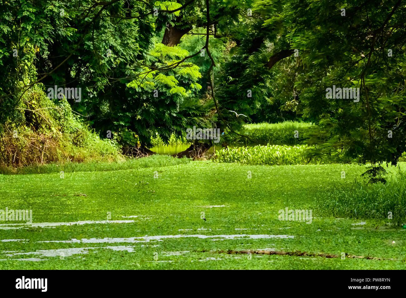 Vorgartengestaltung Stockfotos Vorgartengestaltung Bilder Alamy