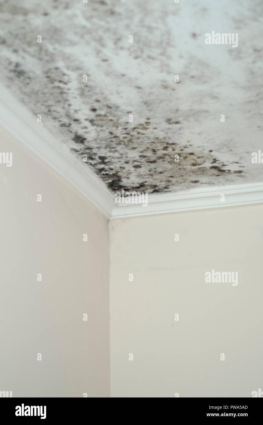 Schimmel Schimmel Schäden Haus weiße Wand Decke Ecke Stockfoto, Bild ...