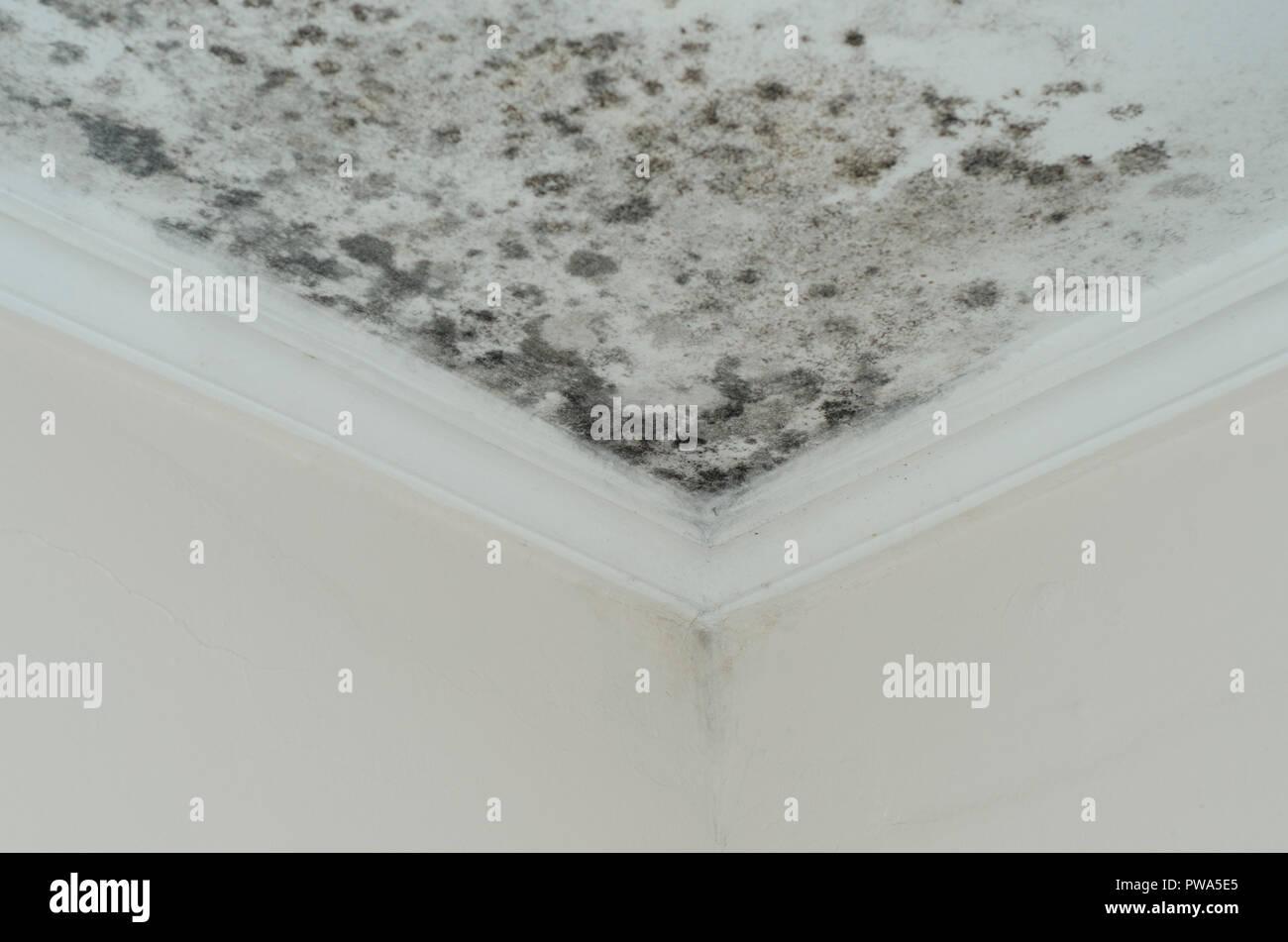 Schimmel Schimmel Schäden Haus Decke Stockfoto, Bild: 222114653 - Alamy