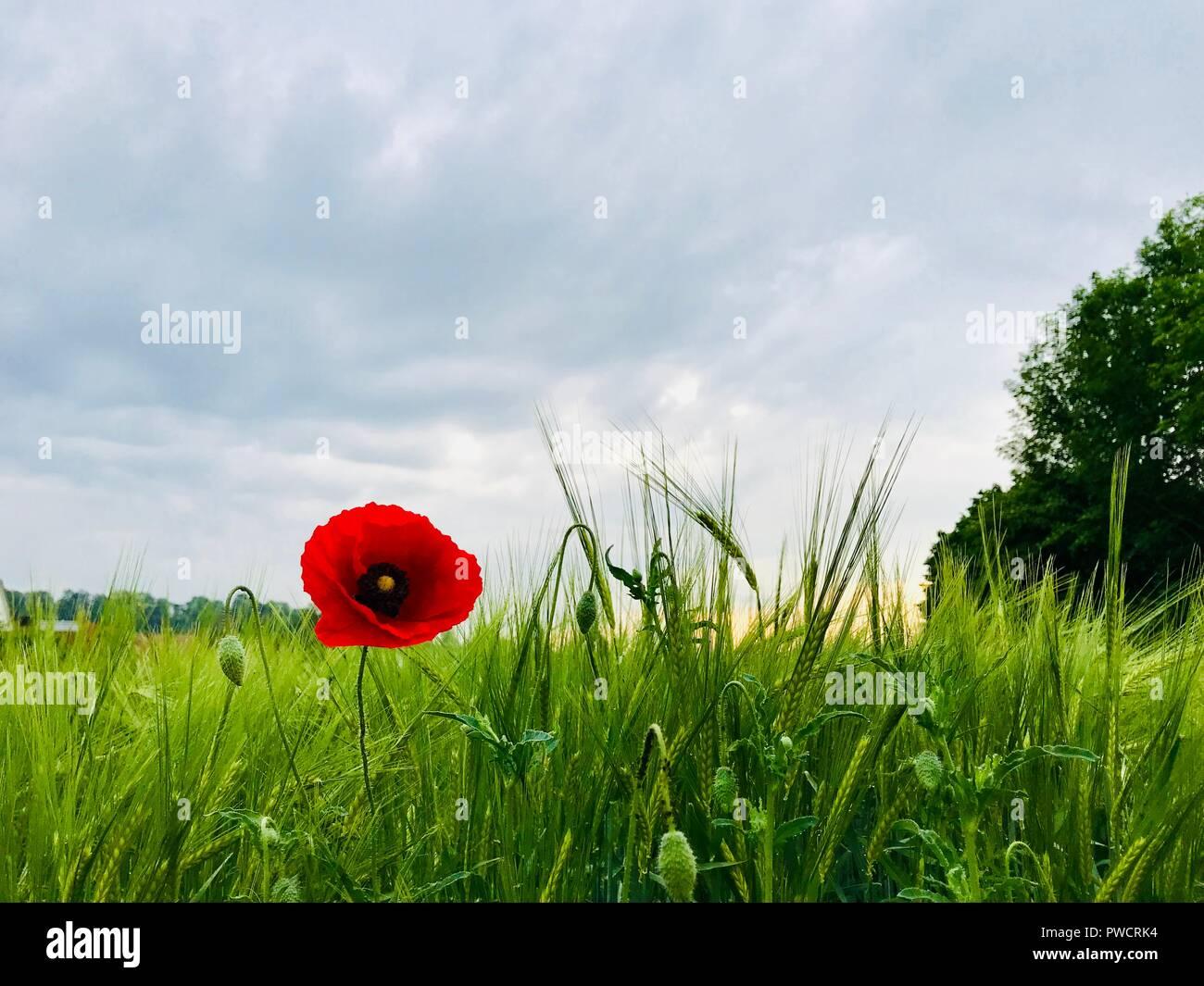 Blumenfeld Stockbild