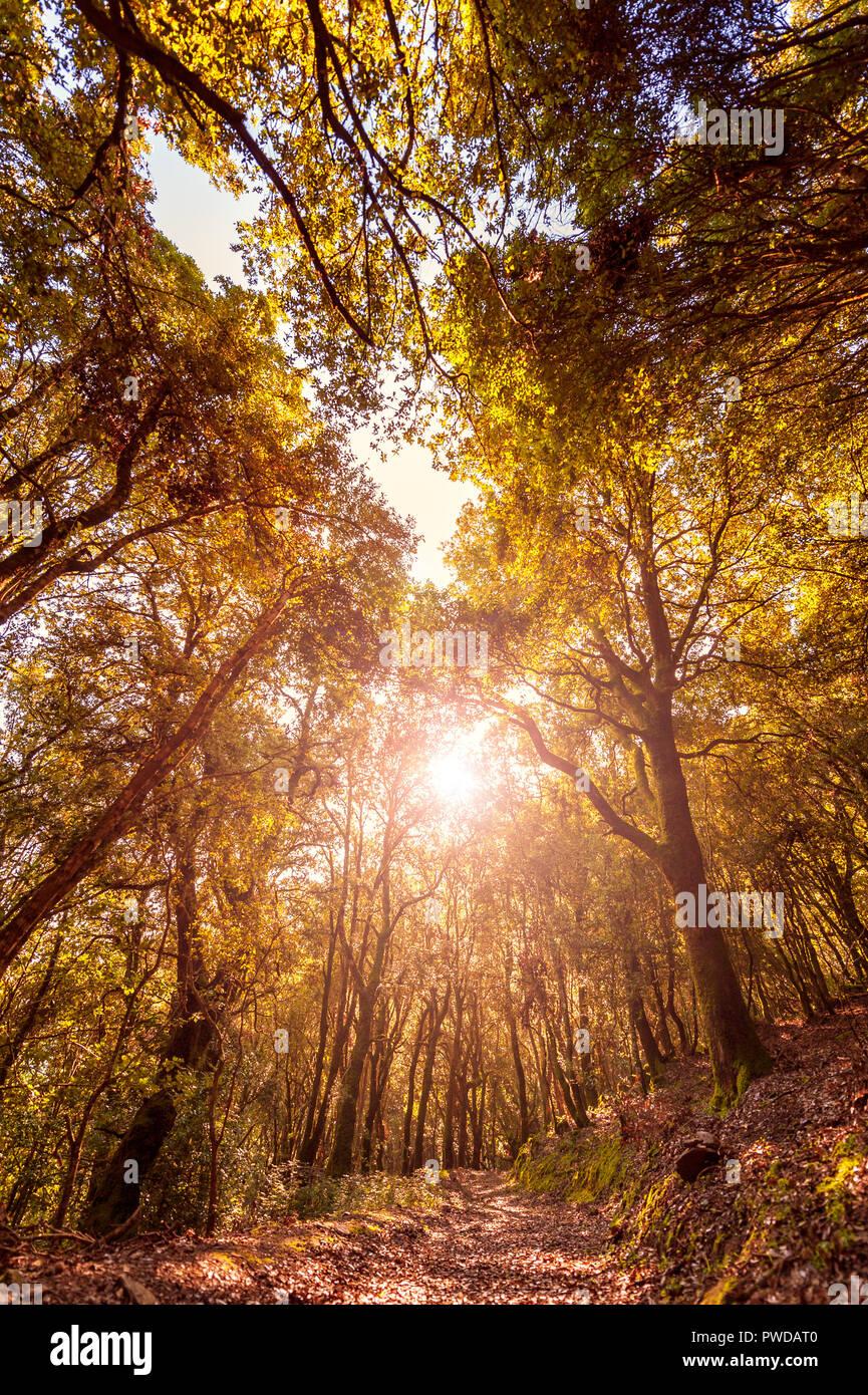 Schönen Sonnenuntergang auf einem Pfad innerhalb einer Eiche Wald im Herbst, mit den Strahlen der Sonne Filterung durch die Äste. Stockfoto