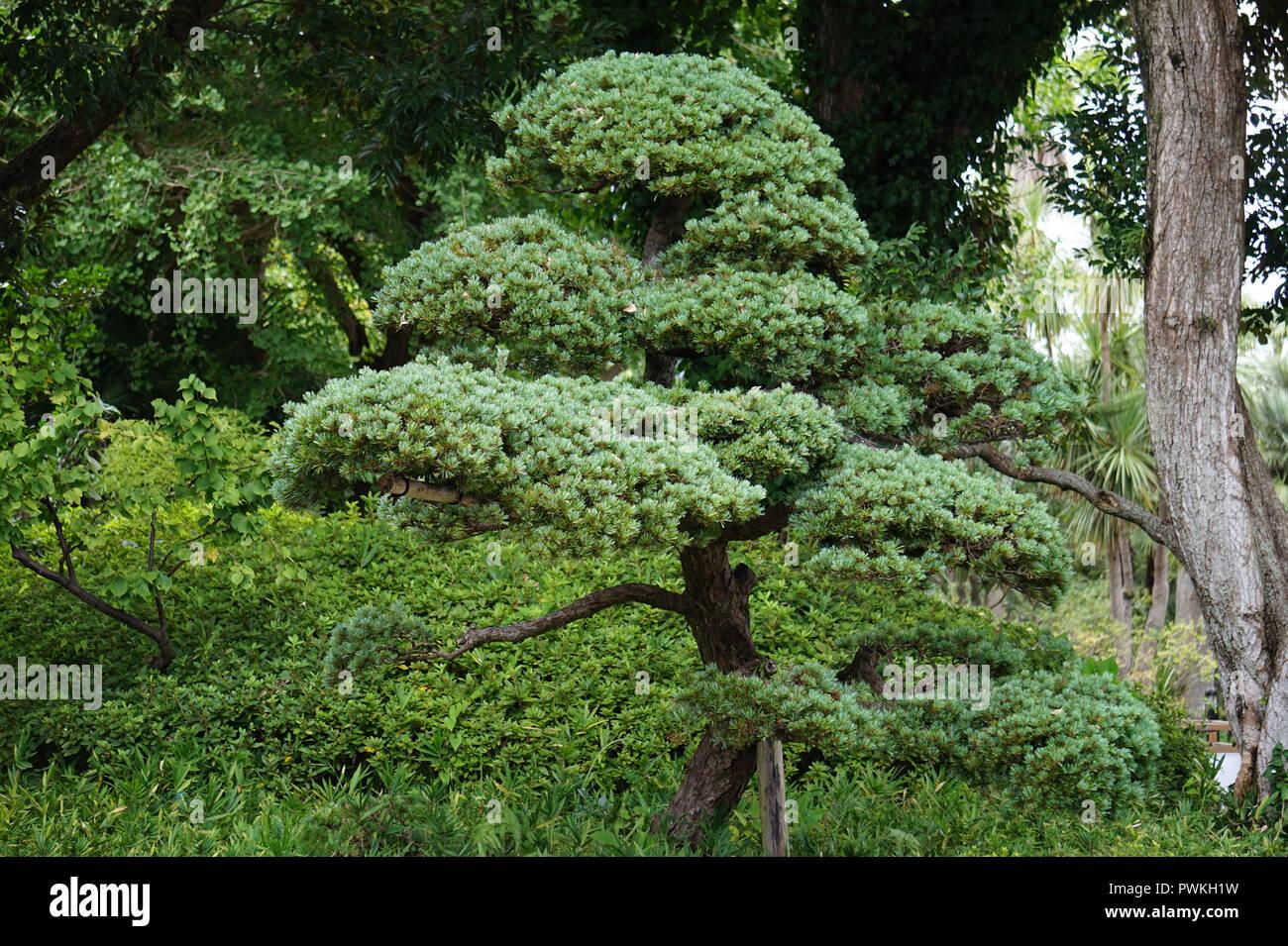 Japanische Baum Im Garten Stockfoto Bild 222321285 Alamy