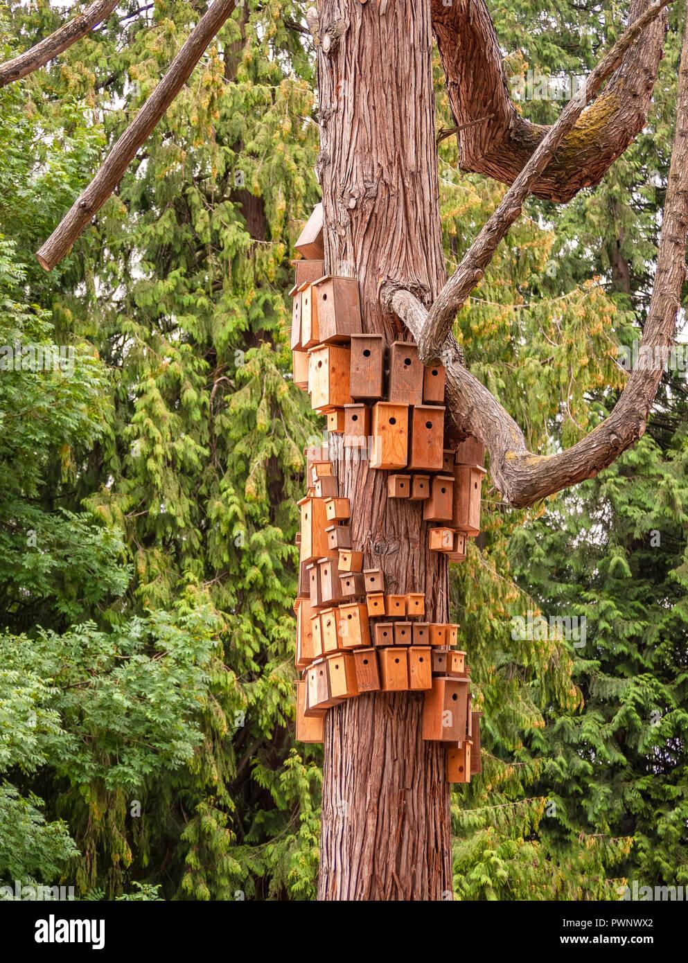 Nesting boxed auf Zeder Körper überfüllt. Stadt vogelhäuschen am baum stamm Stockbild