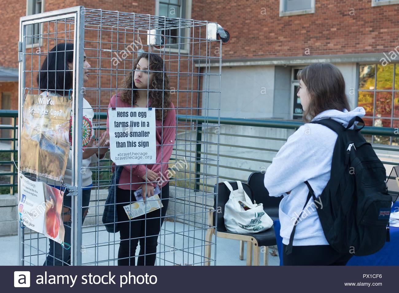 """Studenten an der Universität von Oregon: """"Schöne Käfig', Zeit in einem engen Käfig, um zu verstehen, was Hühner auf ei Farmen leben sind. Stockbild"""