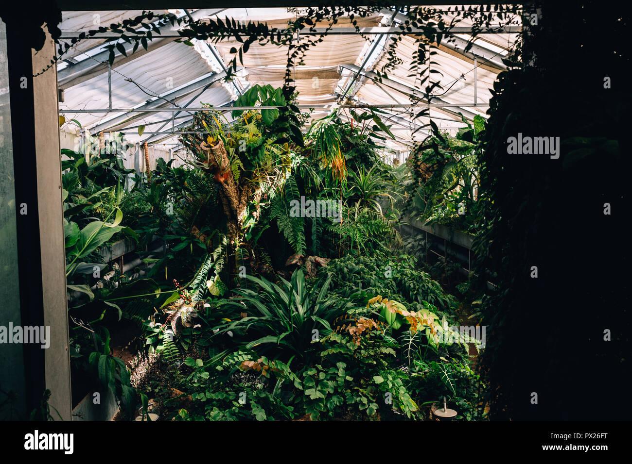Botanischer Garten, Lyon, Frankreich, 2018 Stockbild