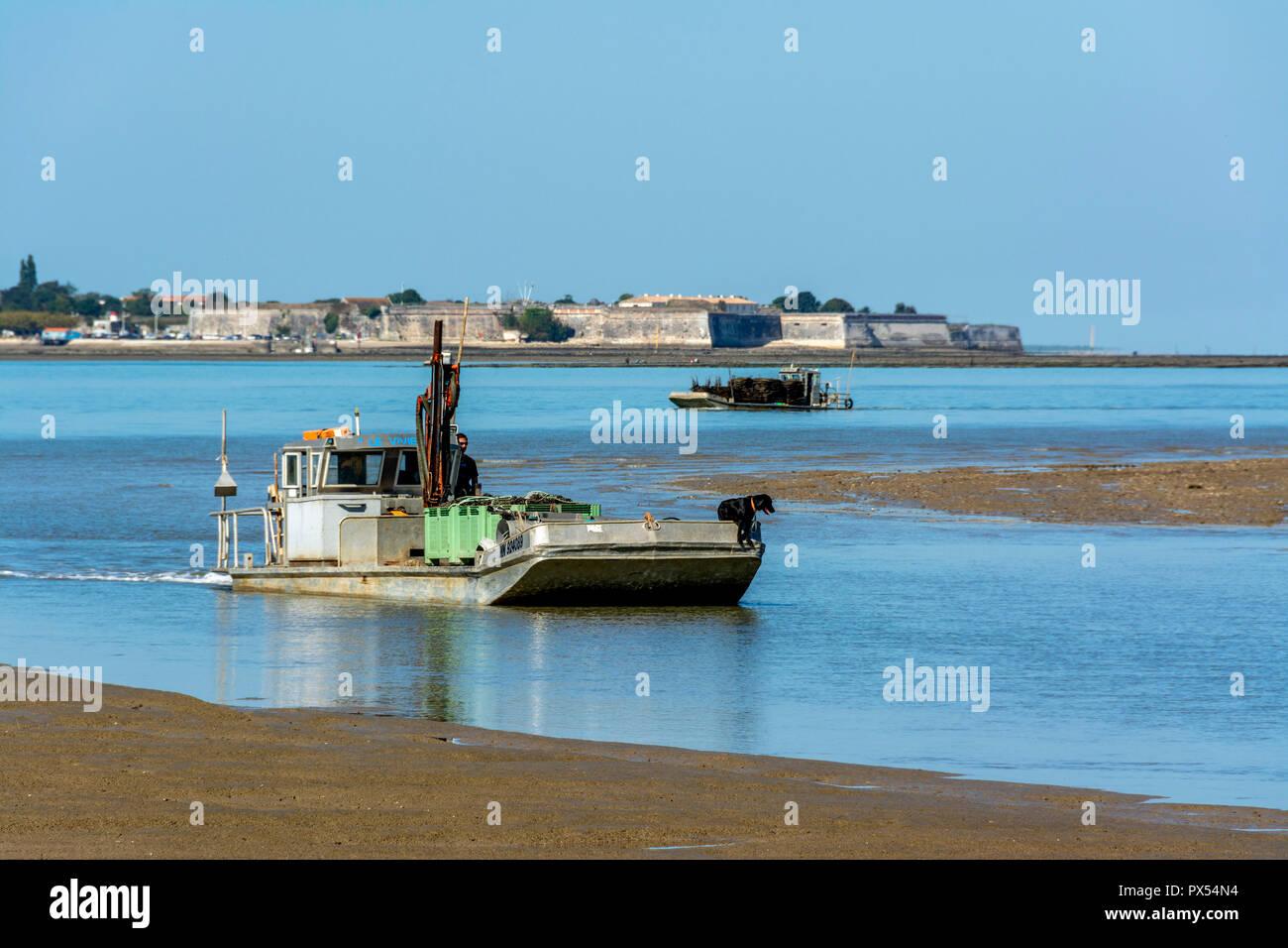 Mit flachem Boden Oyster - Boot am Fort Louvois, Le Chateau d'Oleron im Hintergrund, Charente Maritime, Nouvelle Aquitaine, Frankreich Stockbild