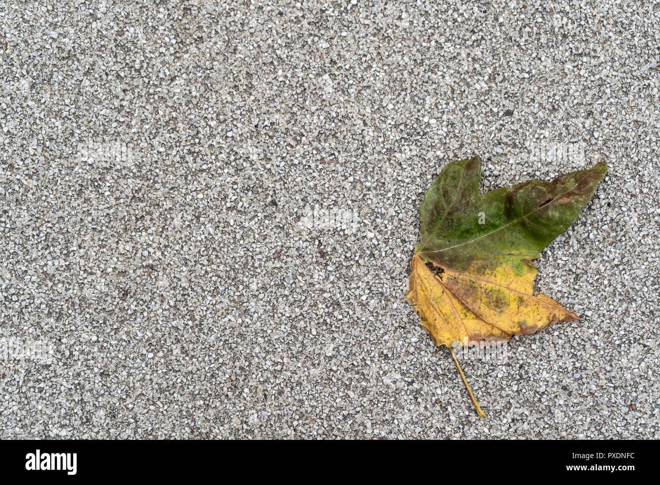 Gelb und grün verfärbten Blätter auf grauem Hintergrund mit viel kopieren Raum im Herbst. Stockbild