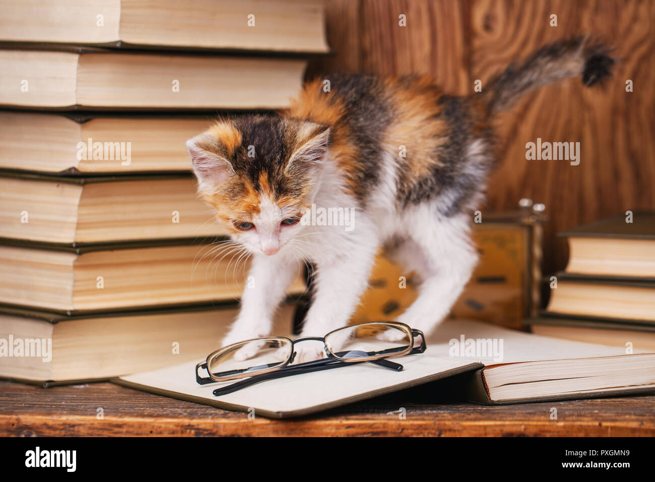 Die Katze ist mit Okularen auf dem Buch liegen gespielt Stockbild