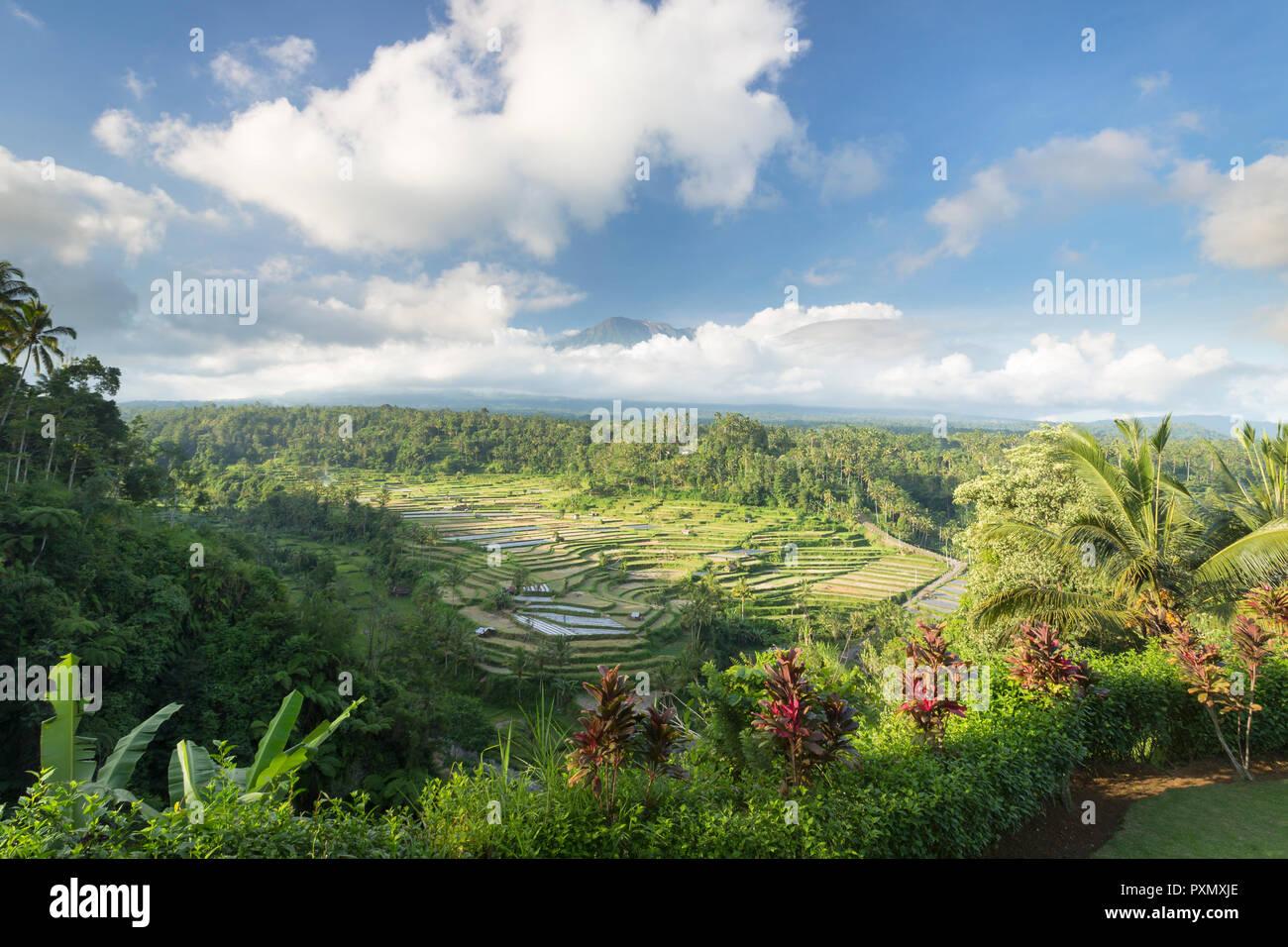 Blick auf Reisterrassen und Vulkan Gunung Agung, Rendang, Bali, Indonesien Stockbild