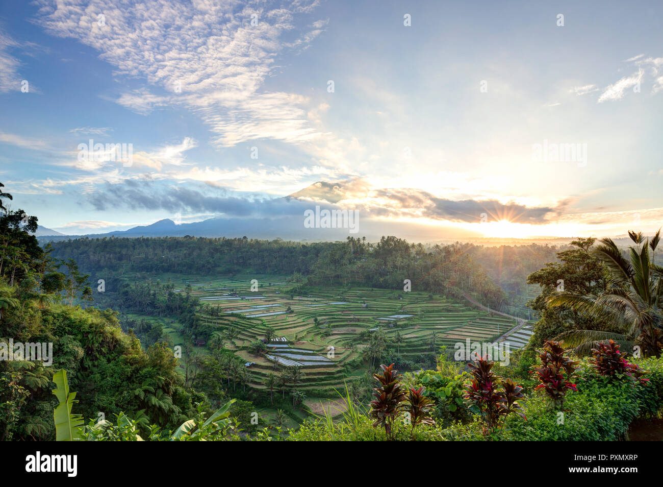Blick auf Reisterrassen und Vulkan Gunung Agung bei Sonnenaufgang, Rendang, Bali, Indonesien Stockbild