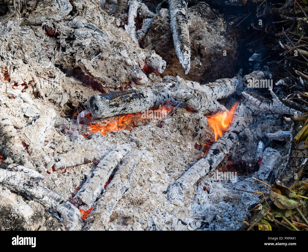 Brennen Gartenabfälle auf einen Herbst Lagerfeuer Holz Esche und helfen, Krankheit zu produzieren Stockbild