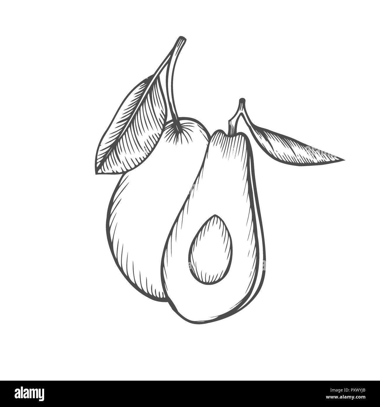 Hand Gezeichnet Avocado In Scheiben Geschnitten Und Stück