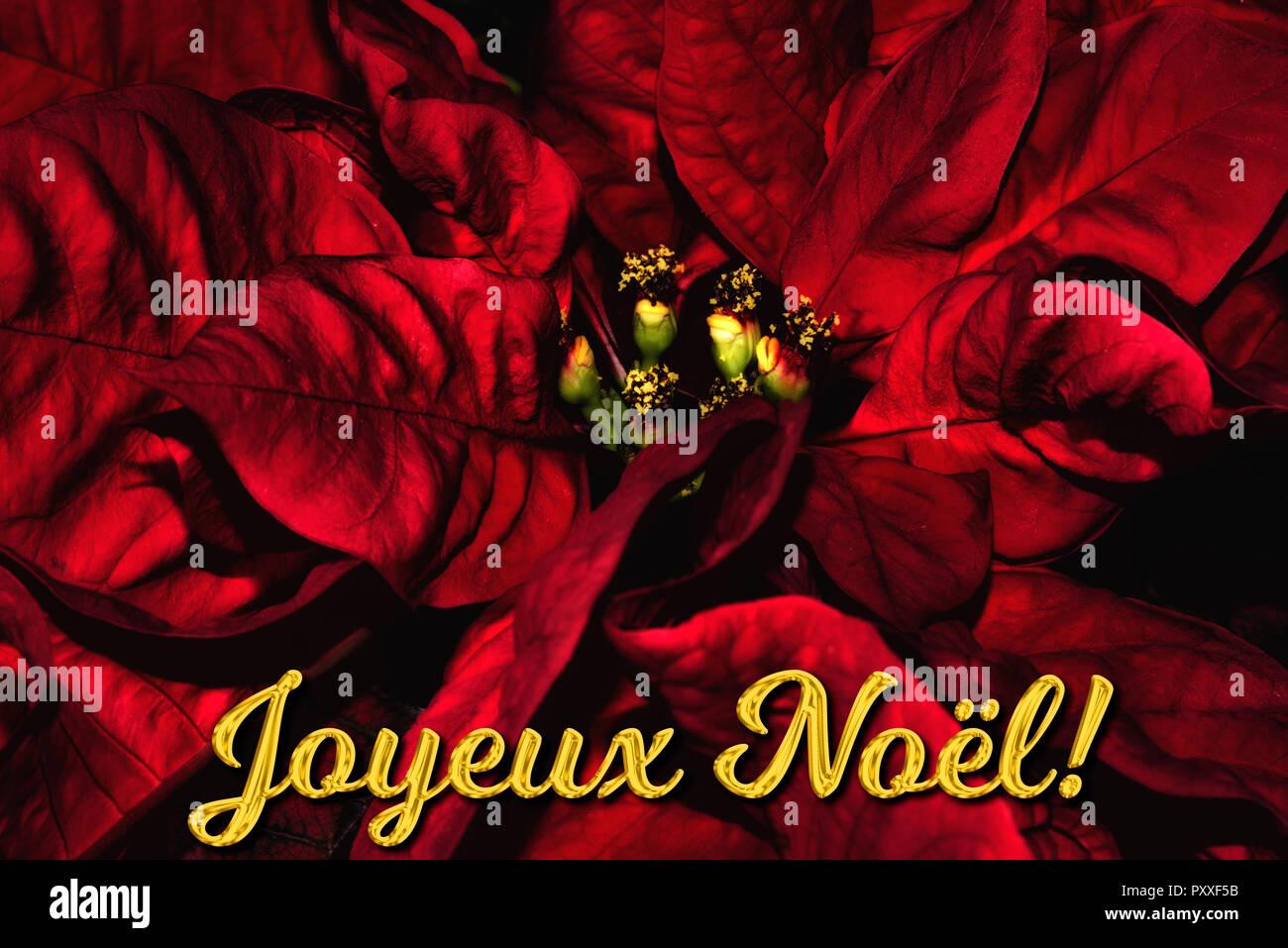 Weihnachtsgrüße Für Karten Texte.Der Französische Text Joyeux Noël Bedeutet Frohe Weihnachten