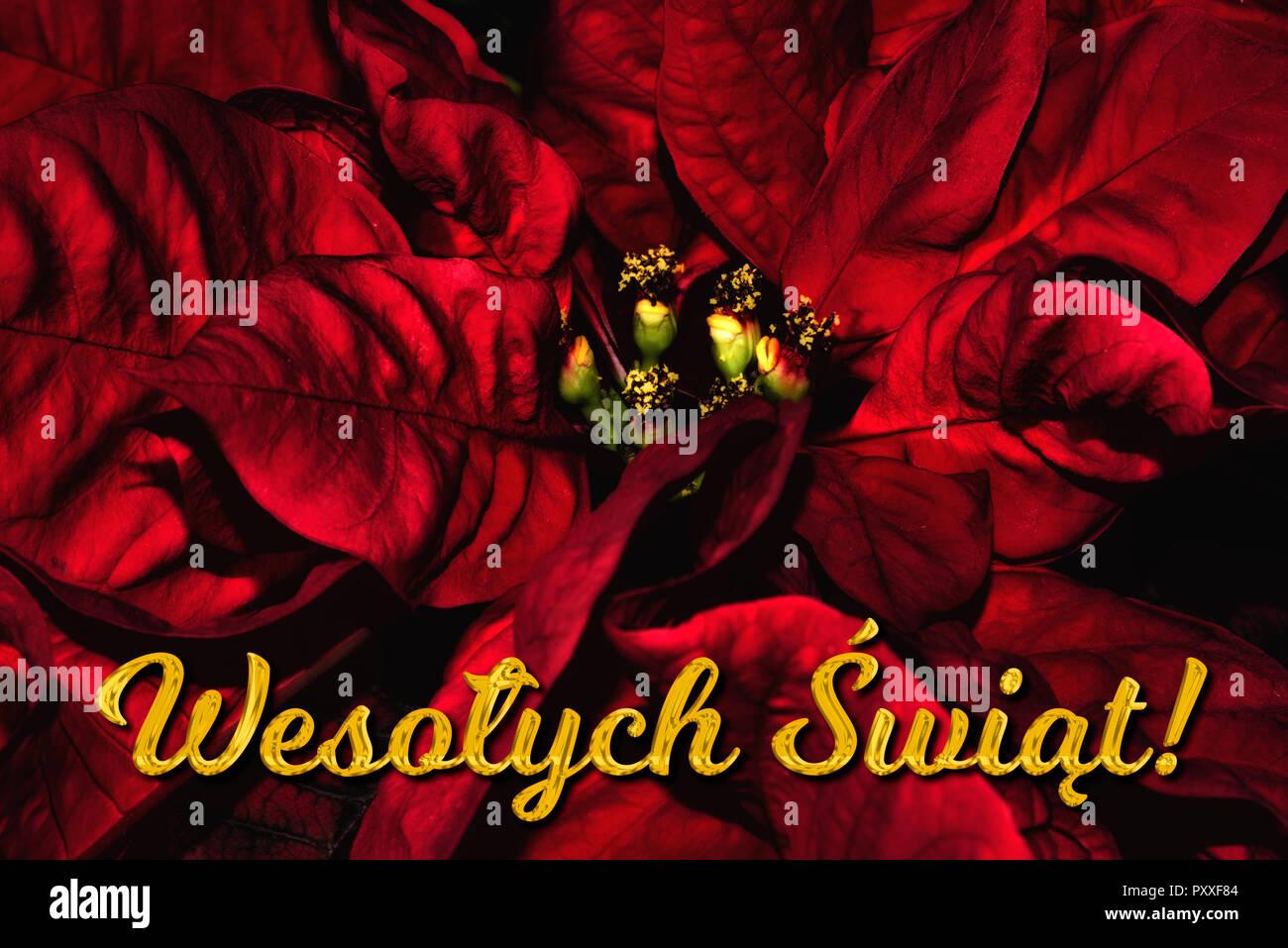 Frohe Weihnachten Text Karte.Der Polnische Text Wesolych Swiat Bedeutet Frohe