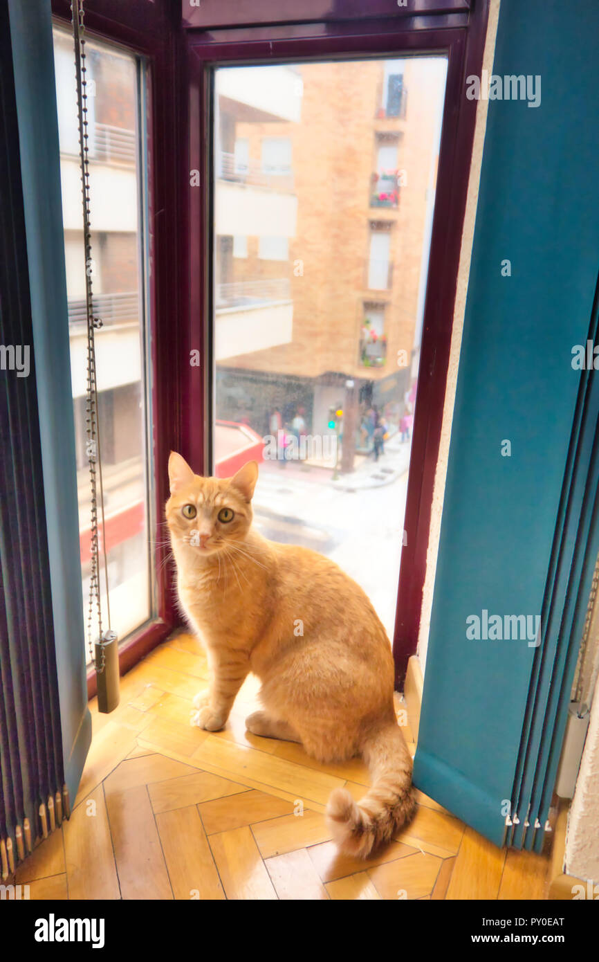 Katze sitzend durch ein Fenster Stockbild