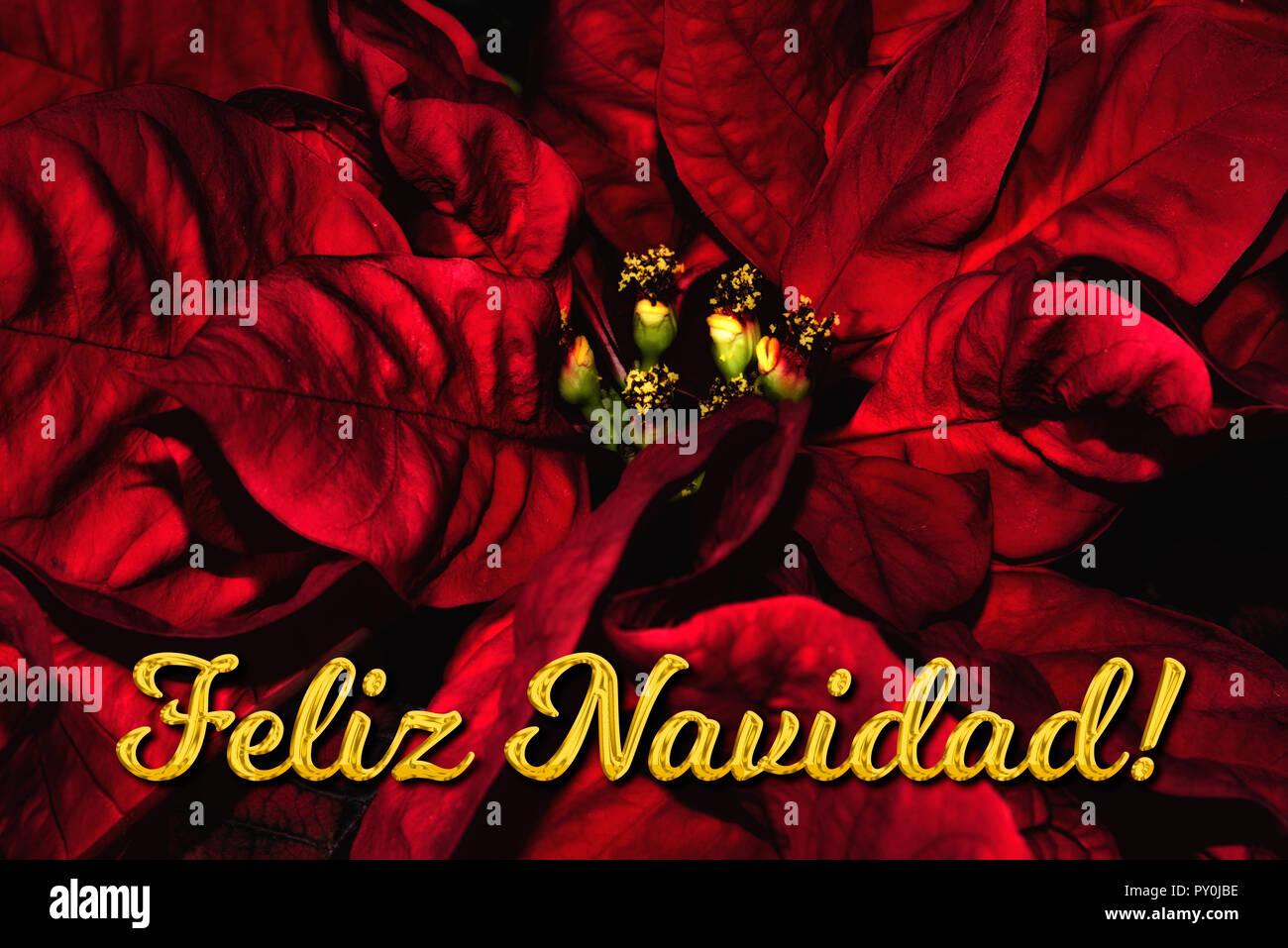 Weihnachtsgrüße Auf Spanisch.Der Spanische Text Feliz Navidad Bedeutet Frohe Weihnachten