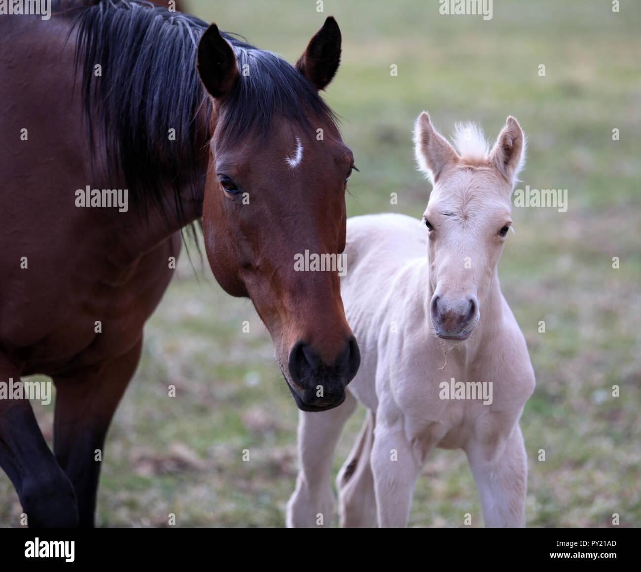 Süße Pferde Stockfotos Süße Pferde Bilder Alamy