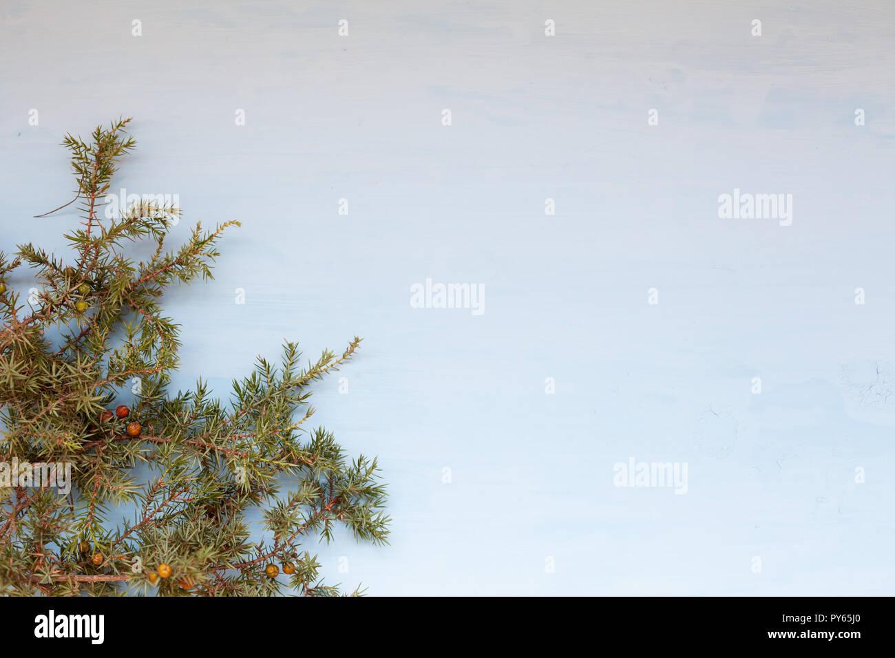 Weihnachtsbaum Nadeln.Weihnachtsbaum Nadeln Auf Einem Grauen Hintergrund Weihnachten