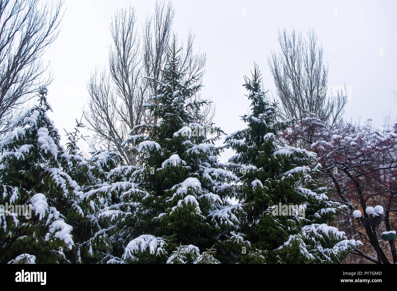 Grüne flauschige Tanne im Schnee, Weihnachten wallpaper Konzept ...