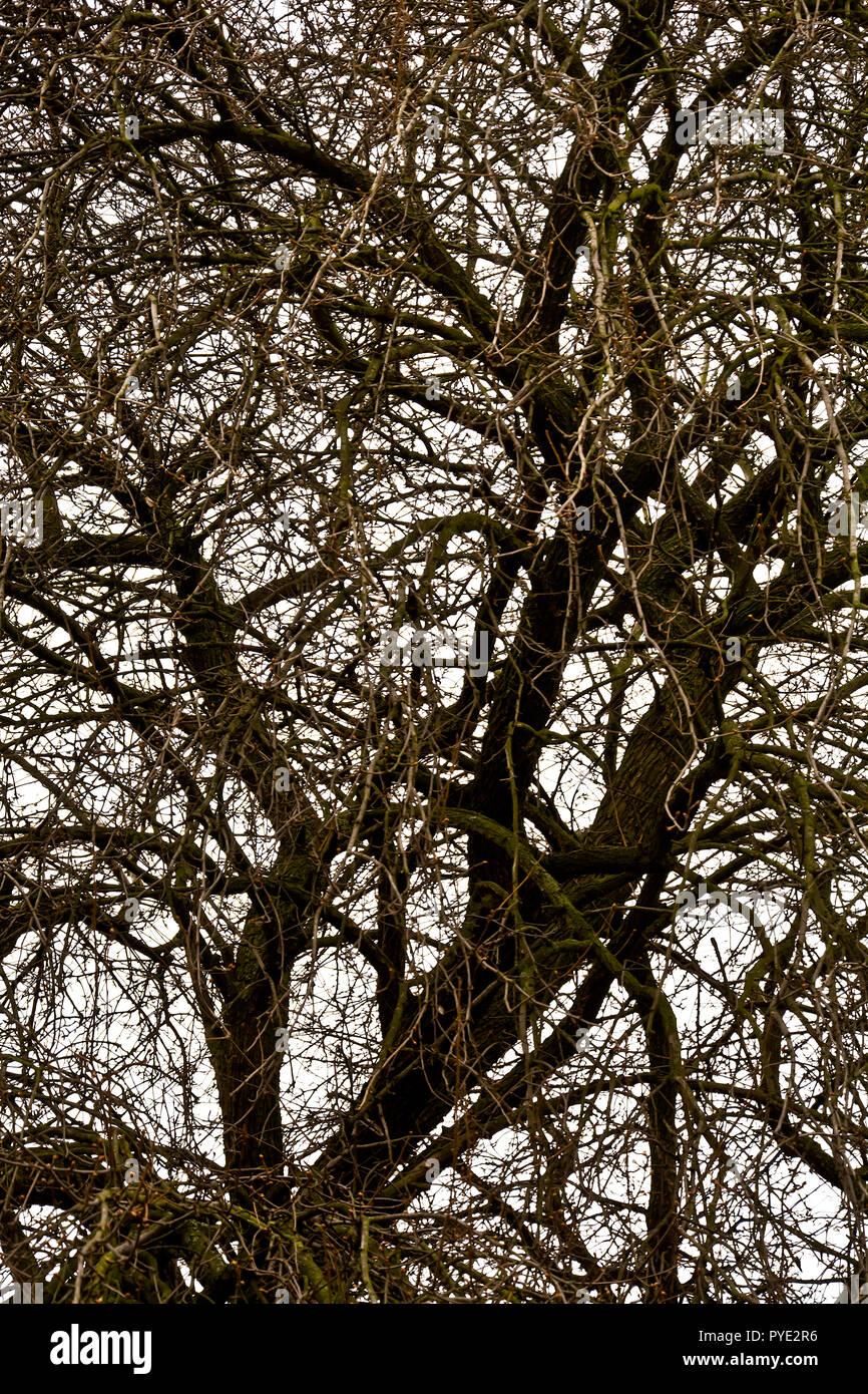 Äste ohne Blätter der alten Bäume im Frühjahr gegen einen bewölkten Himmel. Stockbild