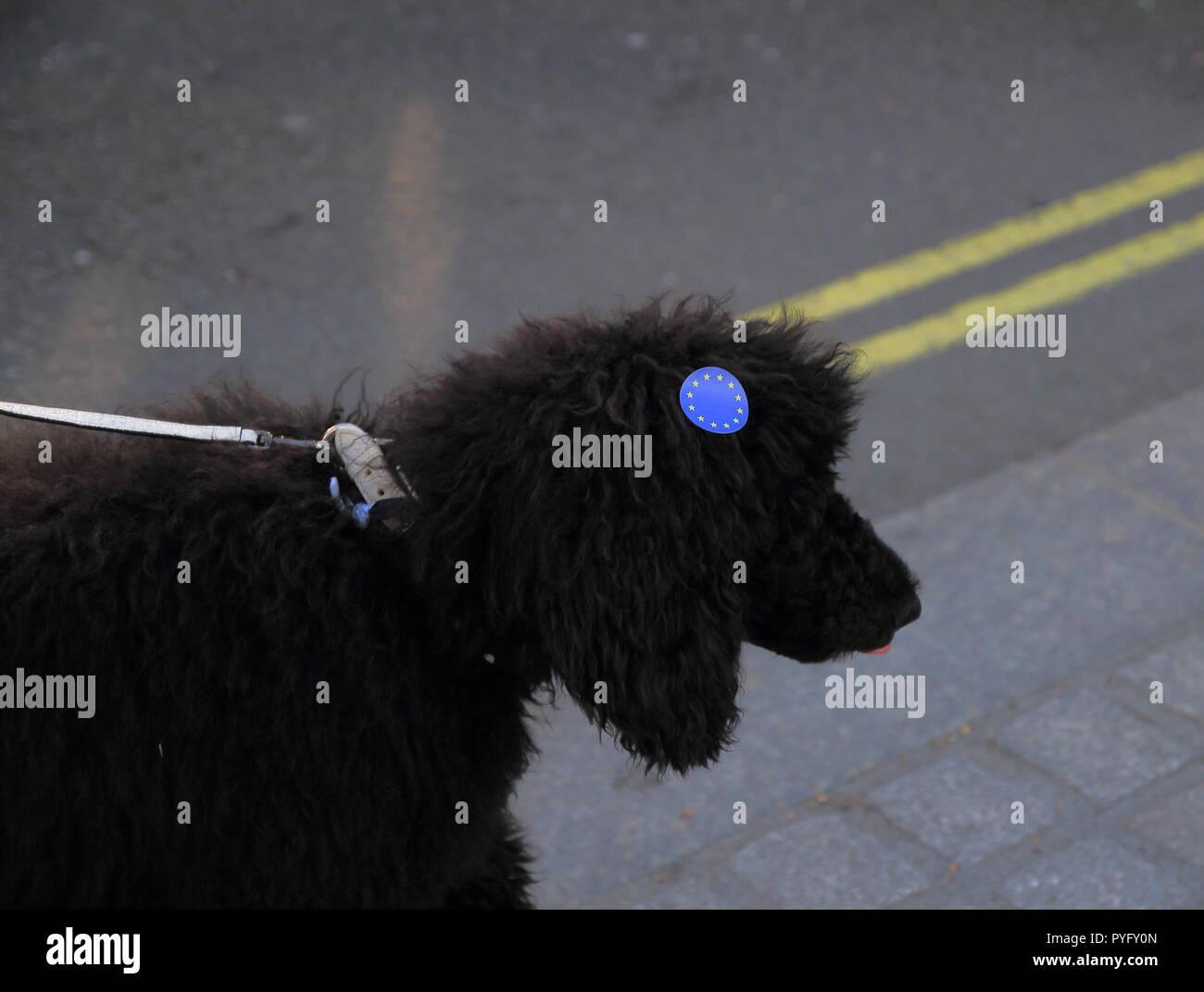 Schwarzer Hund mit blauen Europäischen Union Aufkleber Stockbild