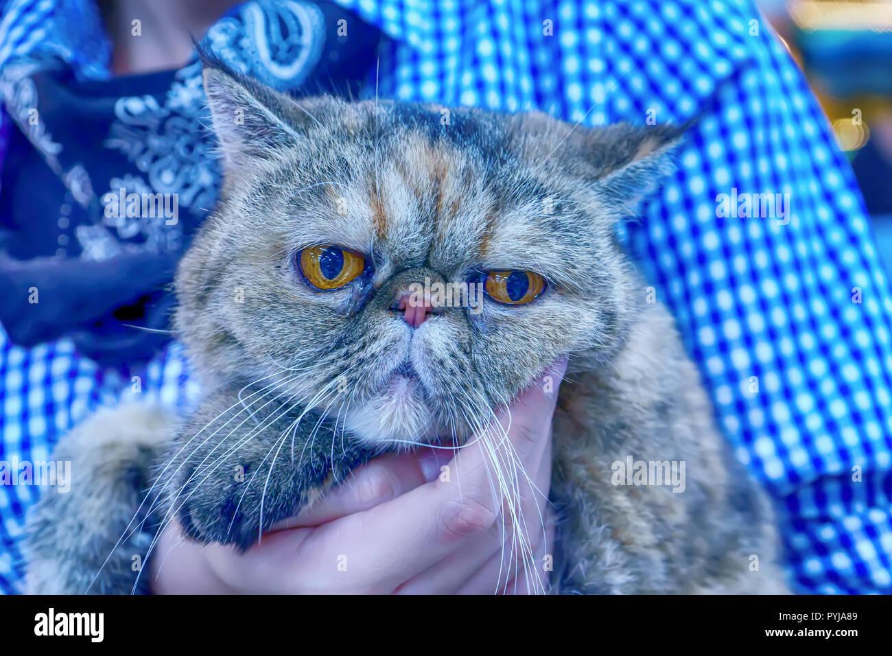Die Katzen sind niedliche Tiere. Es ist zahm. Stockbild