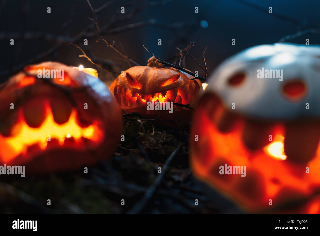 Halloween Kürbisse in einem gruseligen Wald bei Nacht Stockbild