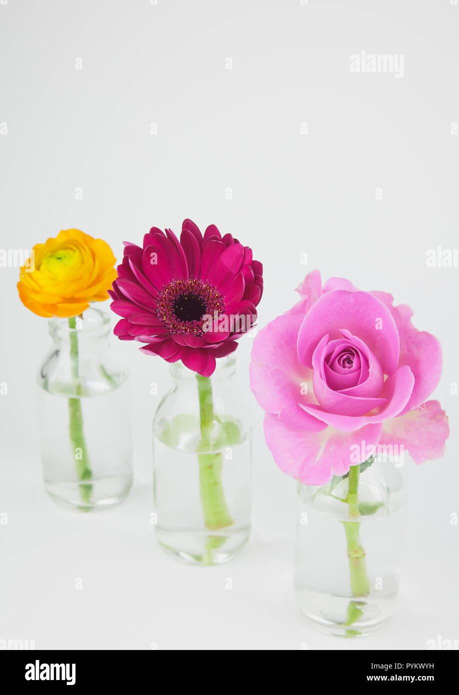 Studio shot von Schnittblumen in der Glasflasche. Stockfoto