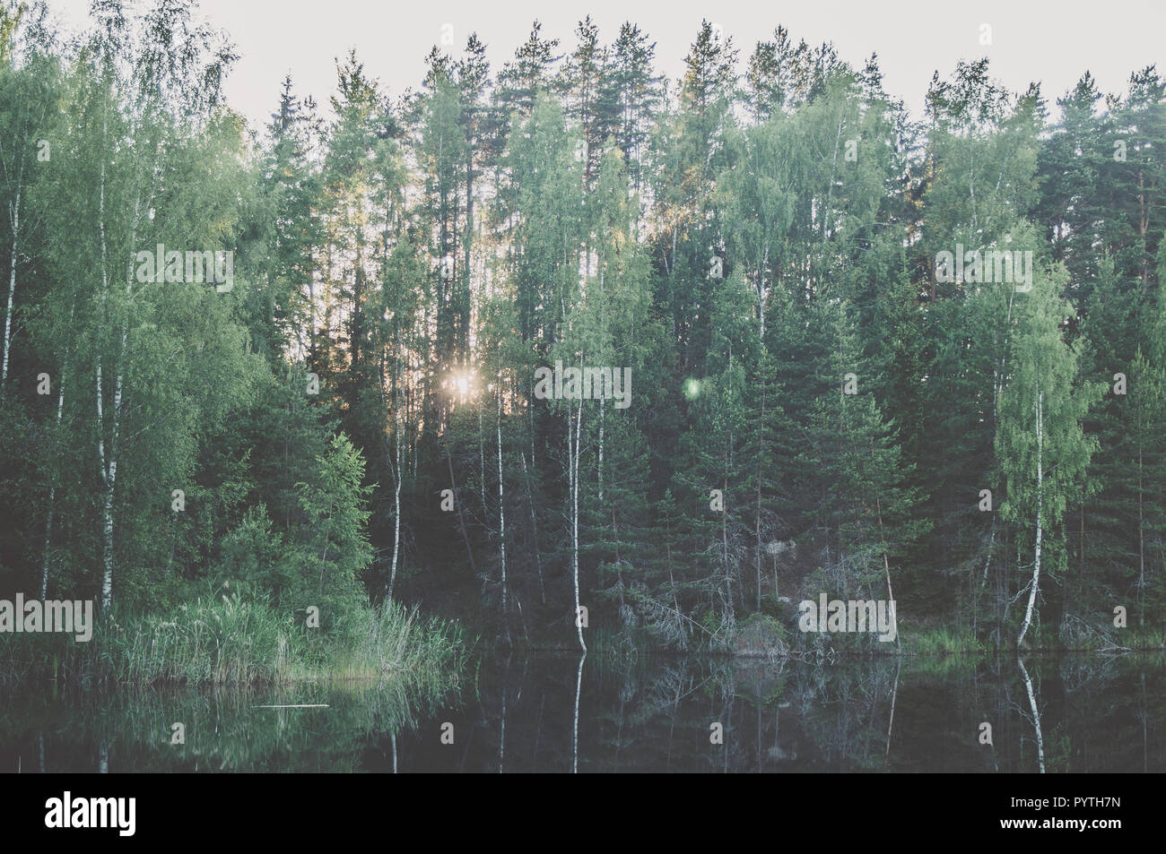 Grüne Landschaft mit grünen Bäumen und Reflexion im Wasser. Sommer. Stockbild